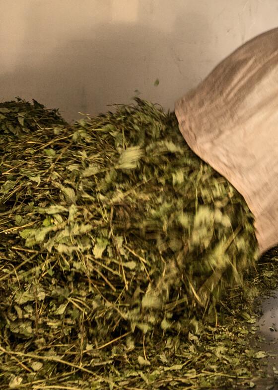 Herb processing