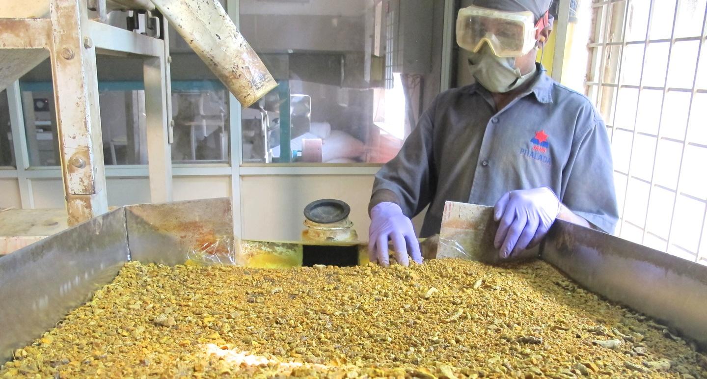 Primary Processing: Sorting Turmeric in India