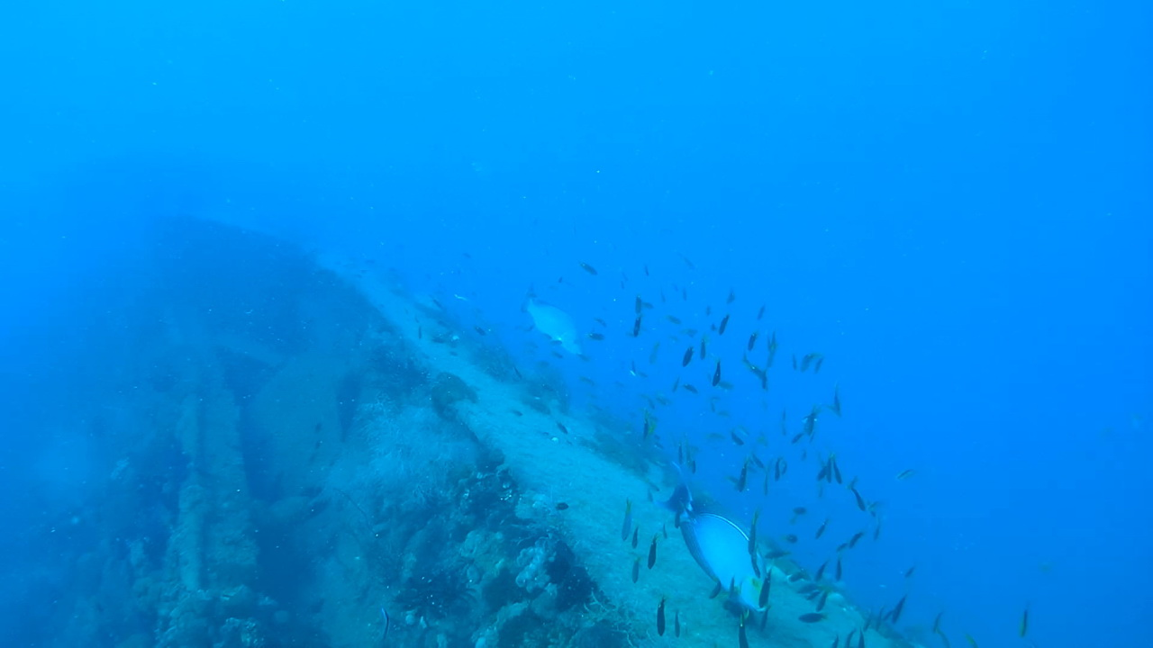 The S.S. Yongala - sank in 1911 near Townsville and can be explored by scuba diving