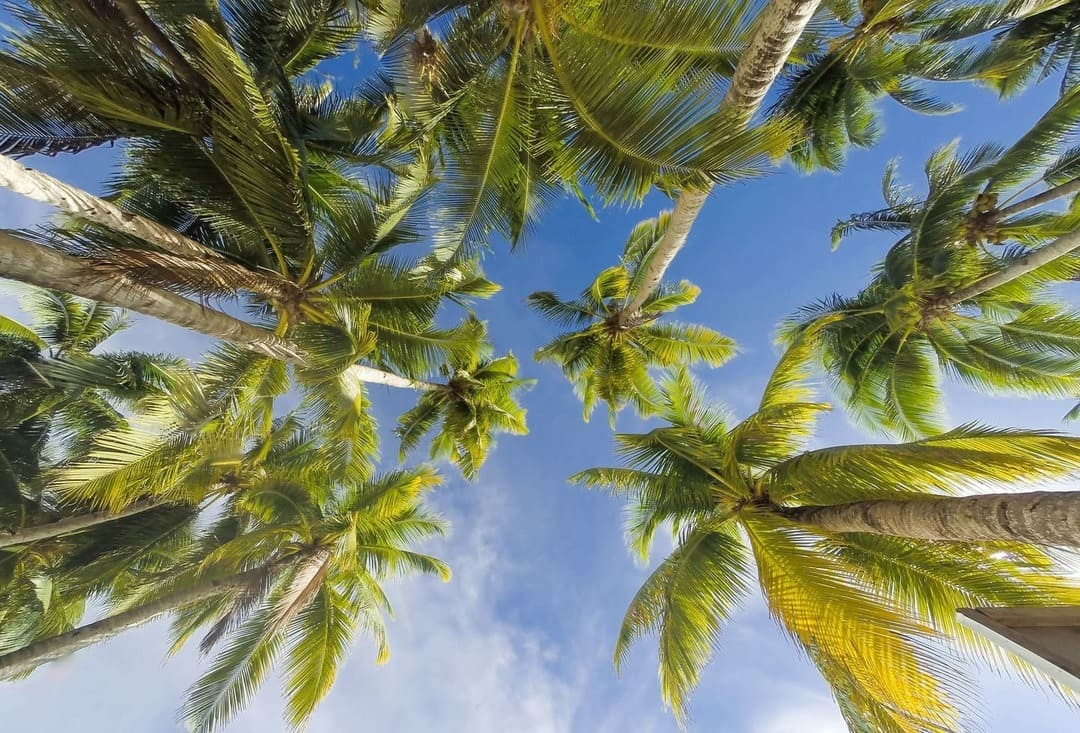 Palm trees on the famous White Beach on Boracay Island, the Philippines