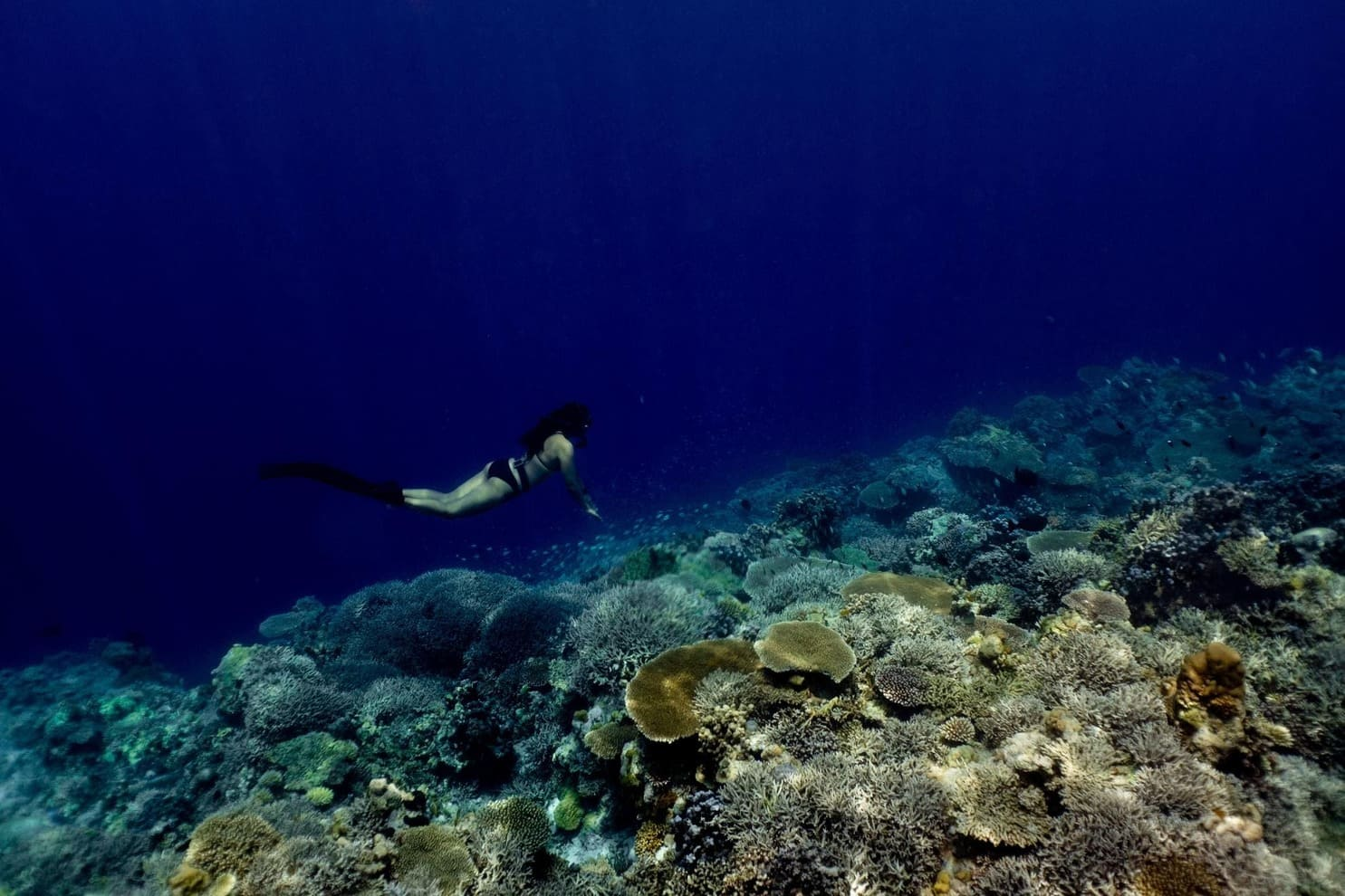 Free diving at a reef at Apo Reef Natural Park, the Philippines