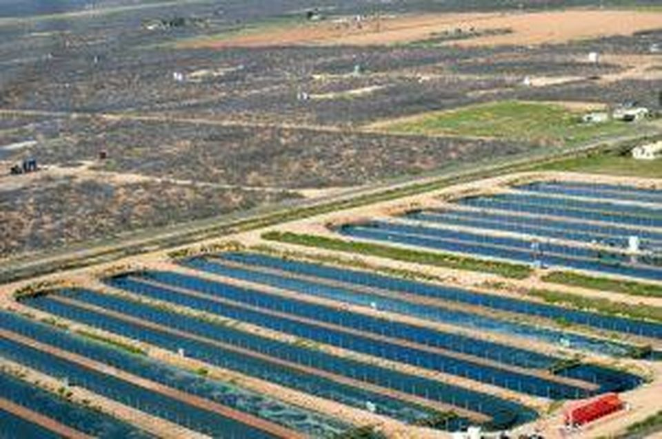 Aerial view of the Imperial, Texas farm, where iWi's algae are grown.
