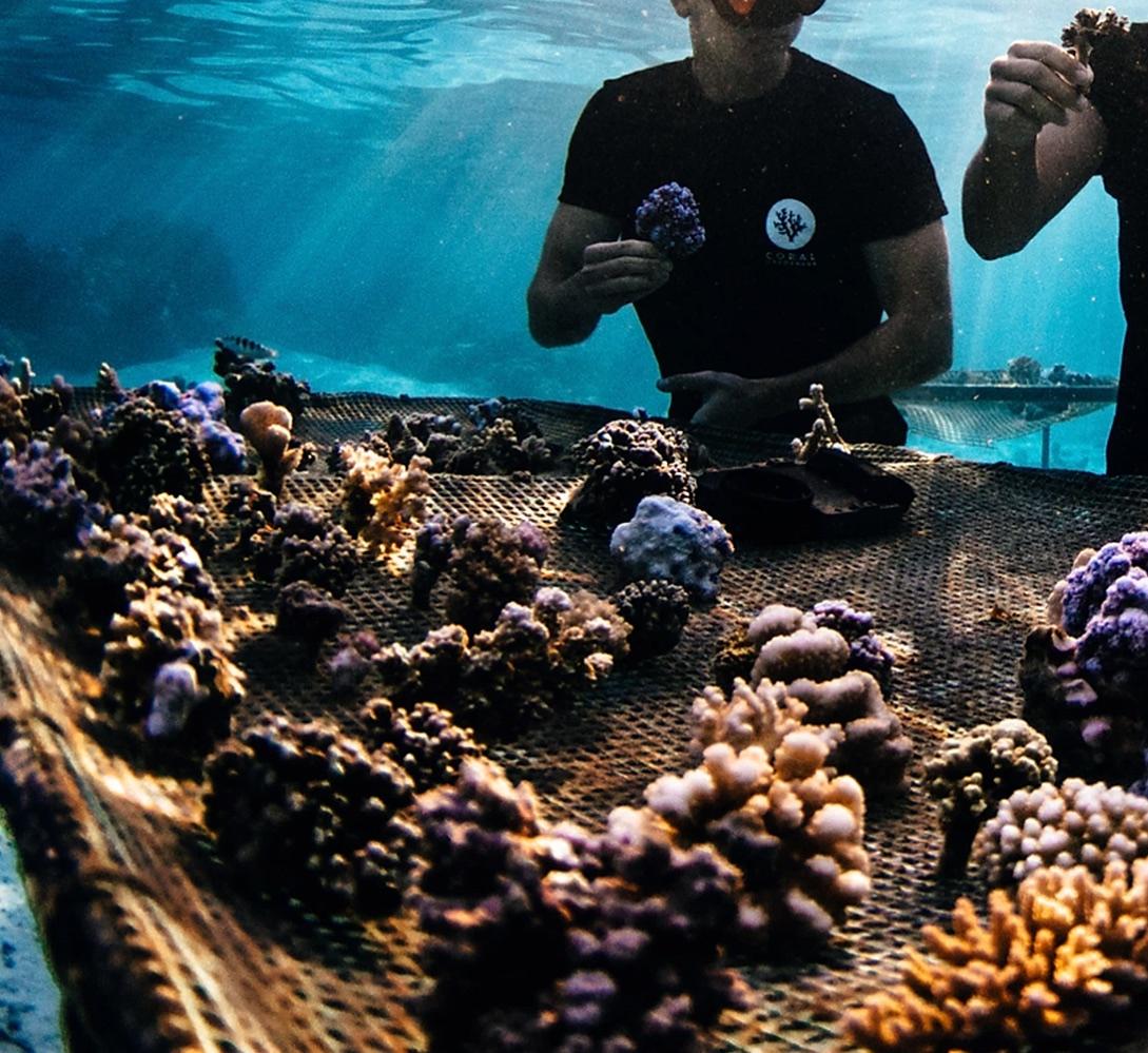 les jardiniers du corail
