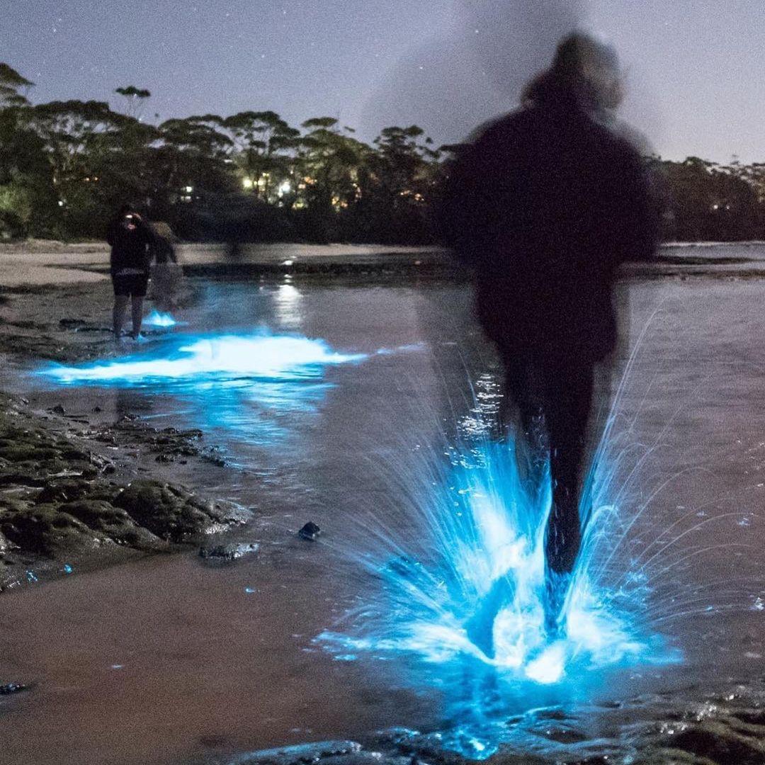 On vous invite à Paris à la rencontre d'une entreprise qui révolutionne l'éclairage public grâce à la biotechnologie. En direct d'un laboratoire scientifique, vous découvrirez comment des micro-organismes naturels, cultivables à l'infini peuvent créer une matière première bioluminescente, capable de réduire la pollution lumineuse de nos villes. image : David Finlay