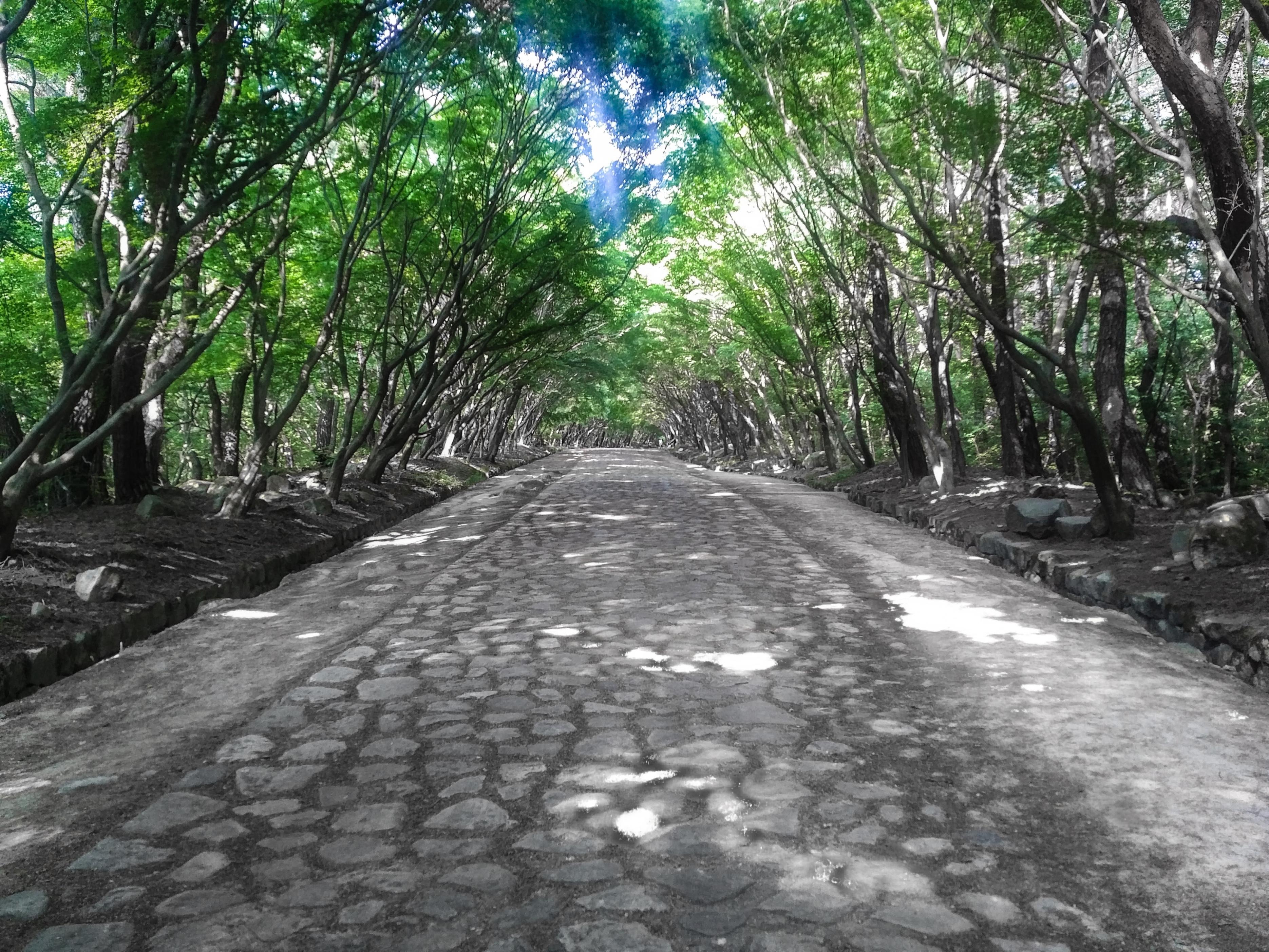 Royal Pathway