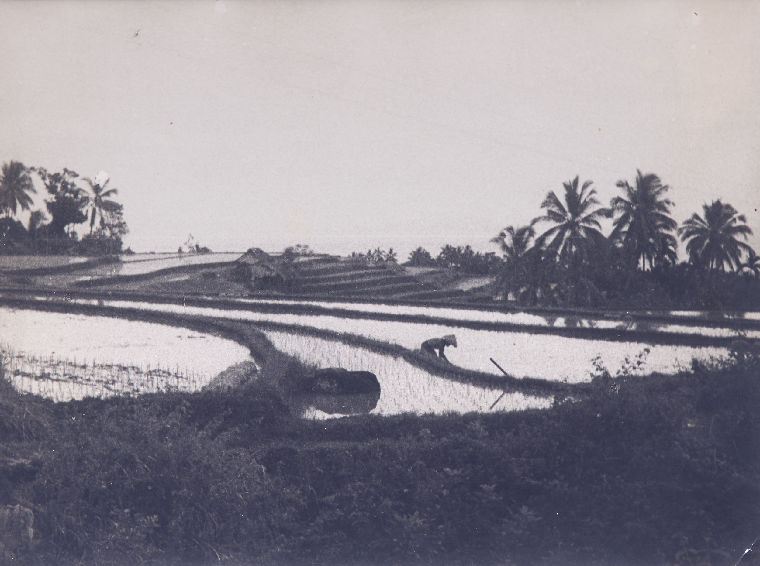 Arthur Fleischmann, Paddy fields at Dawn, gelatin silver print, 15.5 x 20.5 cm.