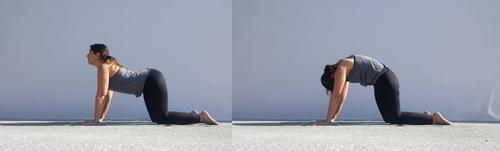 Yoga pose Cat / Cow – Marjaryasana / Bitilasana