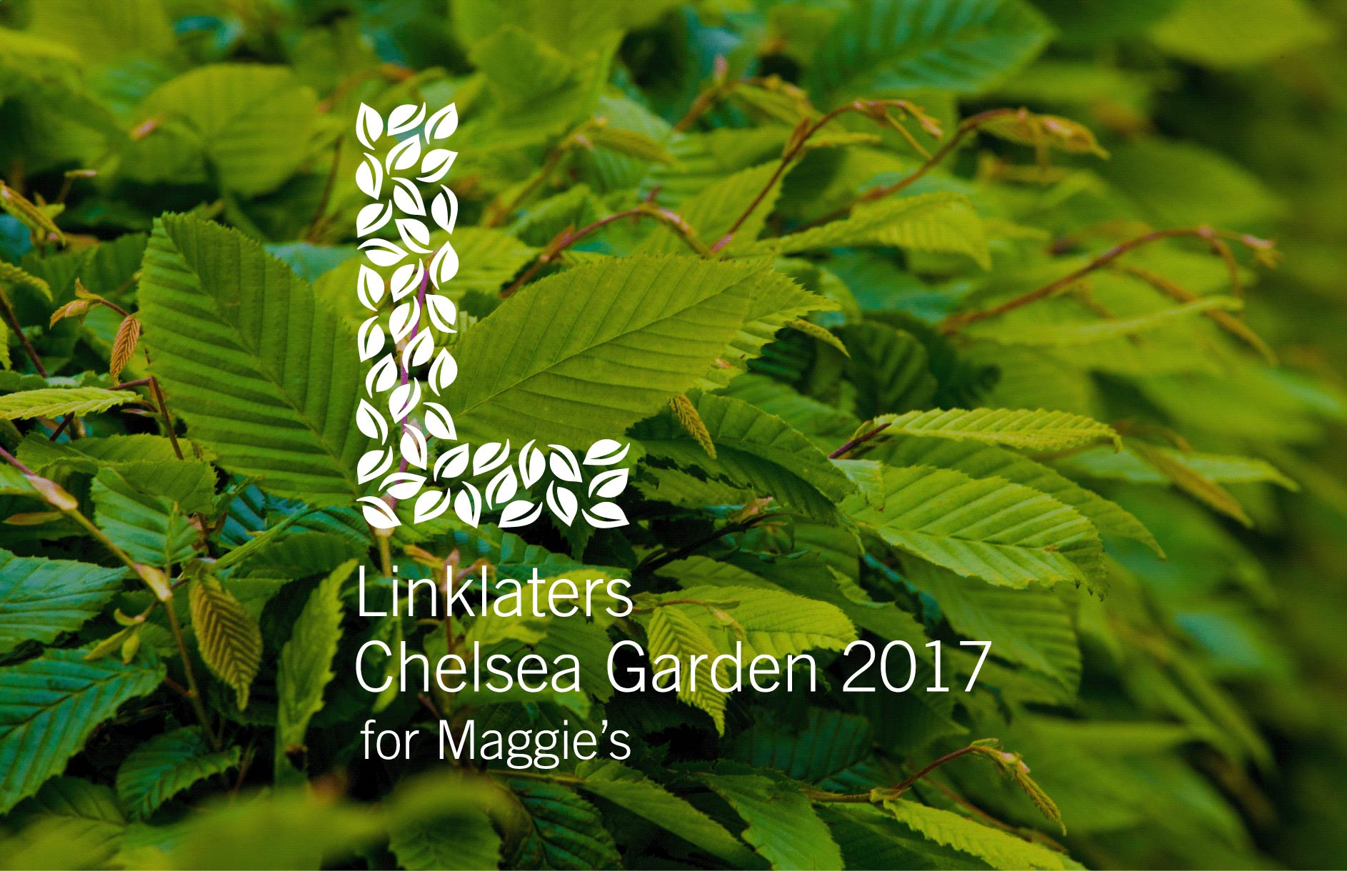 Linklaters / Chelsea Flower Show campaign