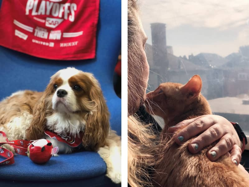 Images by San Francisco SPCA