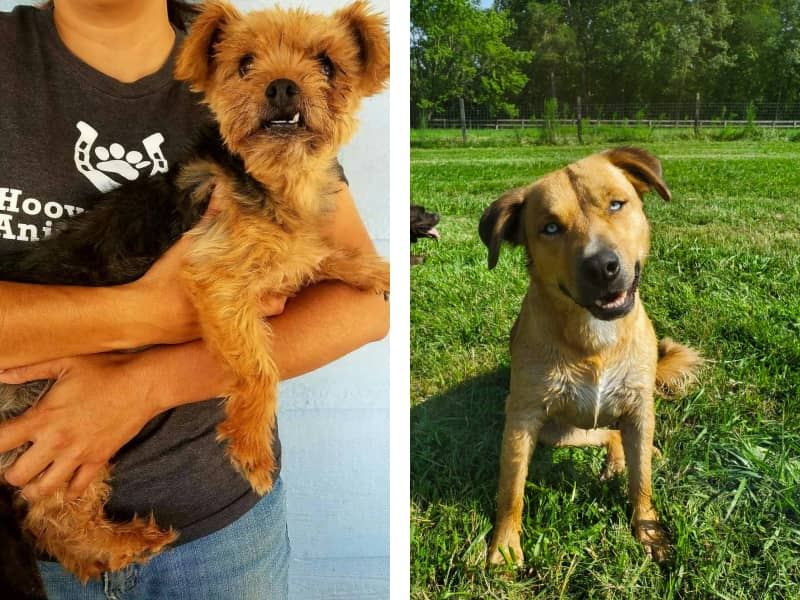 Images by Hooves & Paws animal shelter