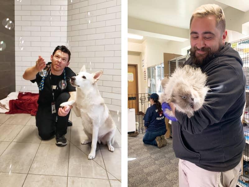 Volunteers at San Francisco SPCA