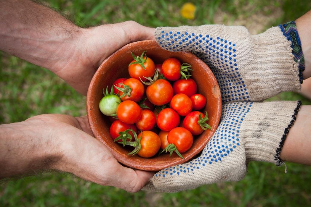 Illustration imaginaire de la nourriture tomates