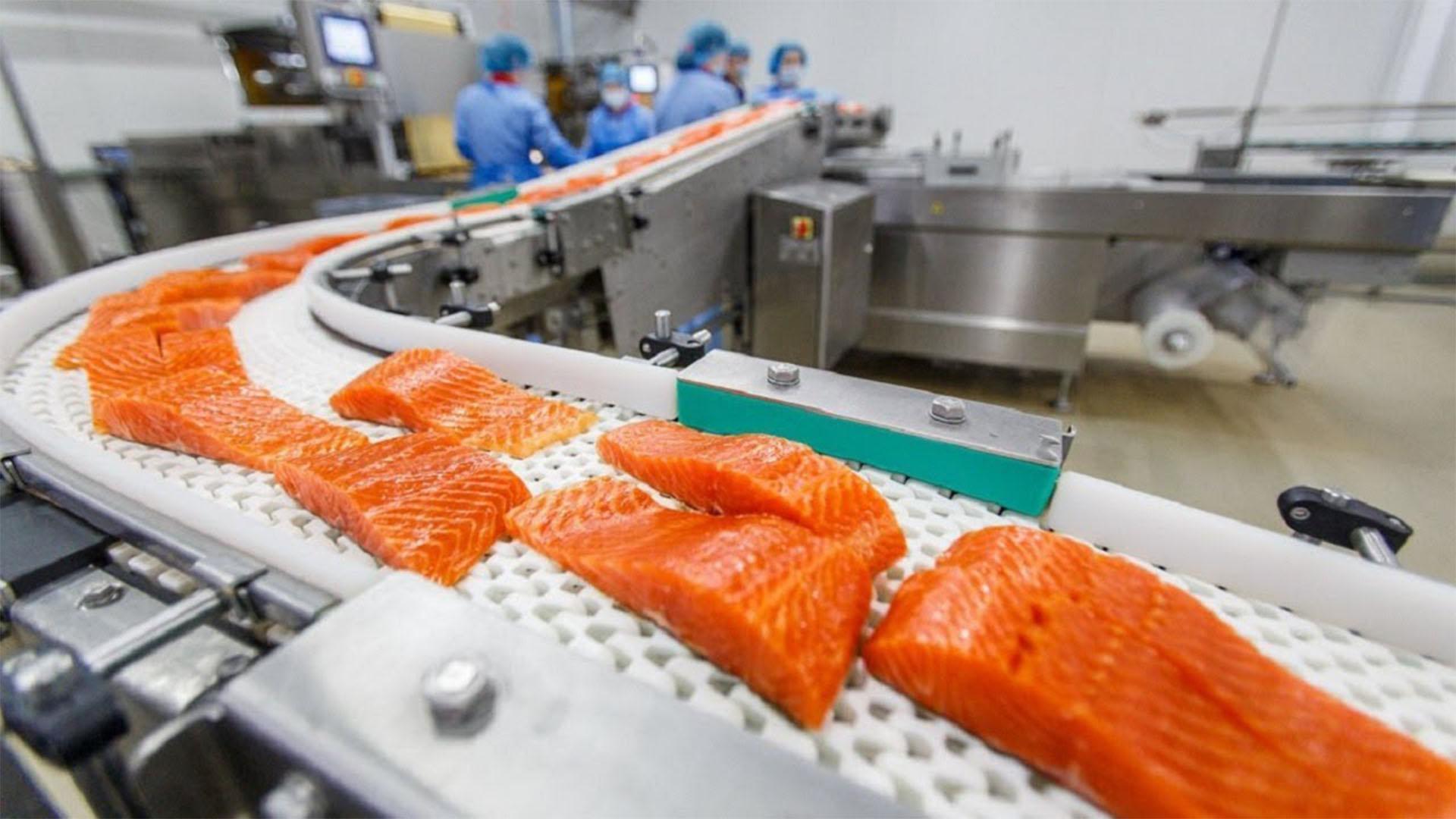 Sea Food & Fish Processing & Storage