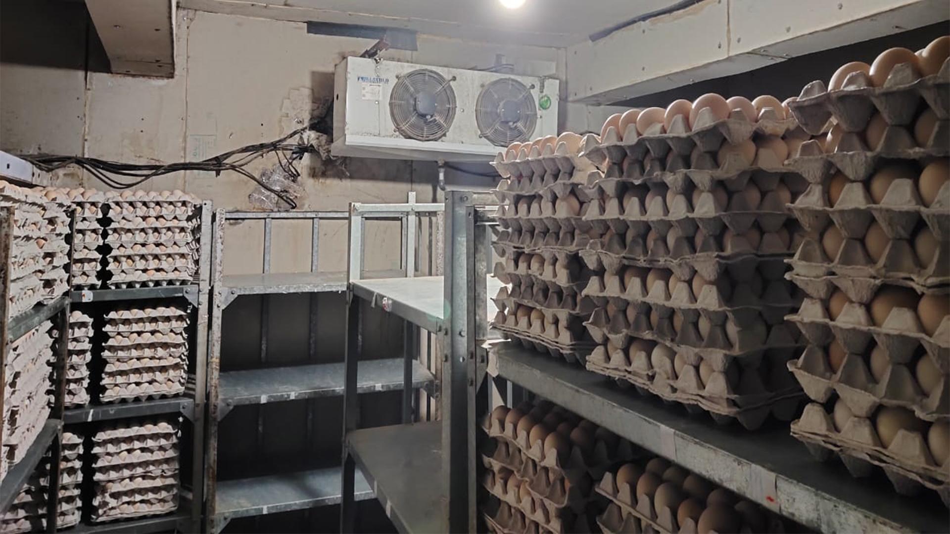 egg cold room