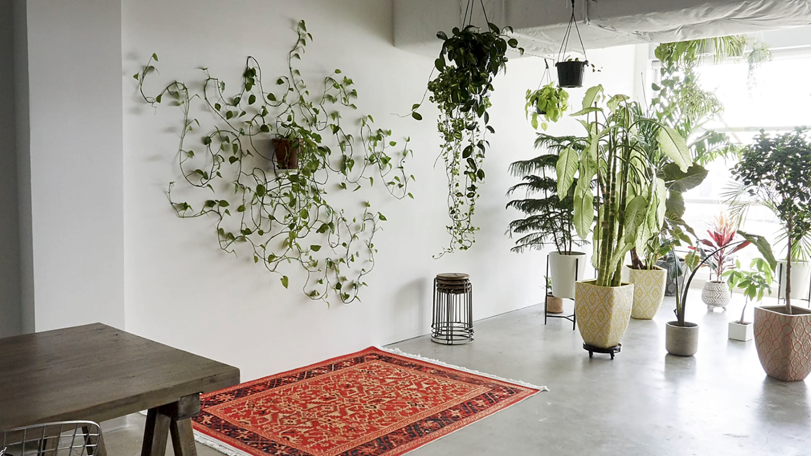 jungle work space