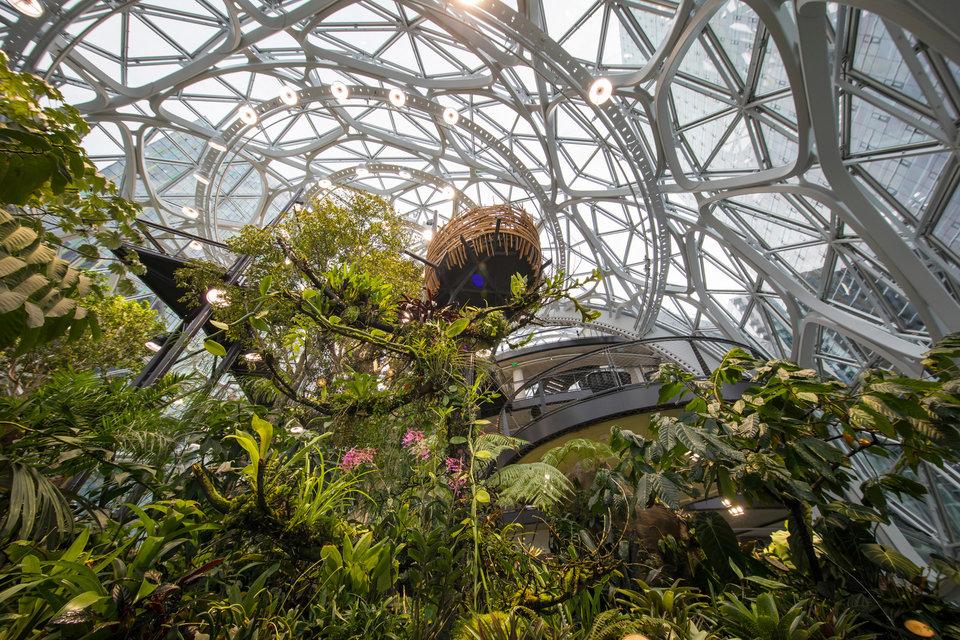 Amazon Spheres nature
