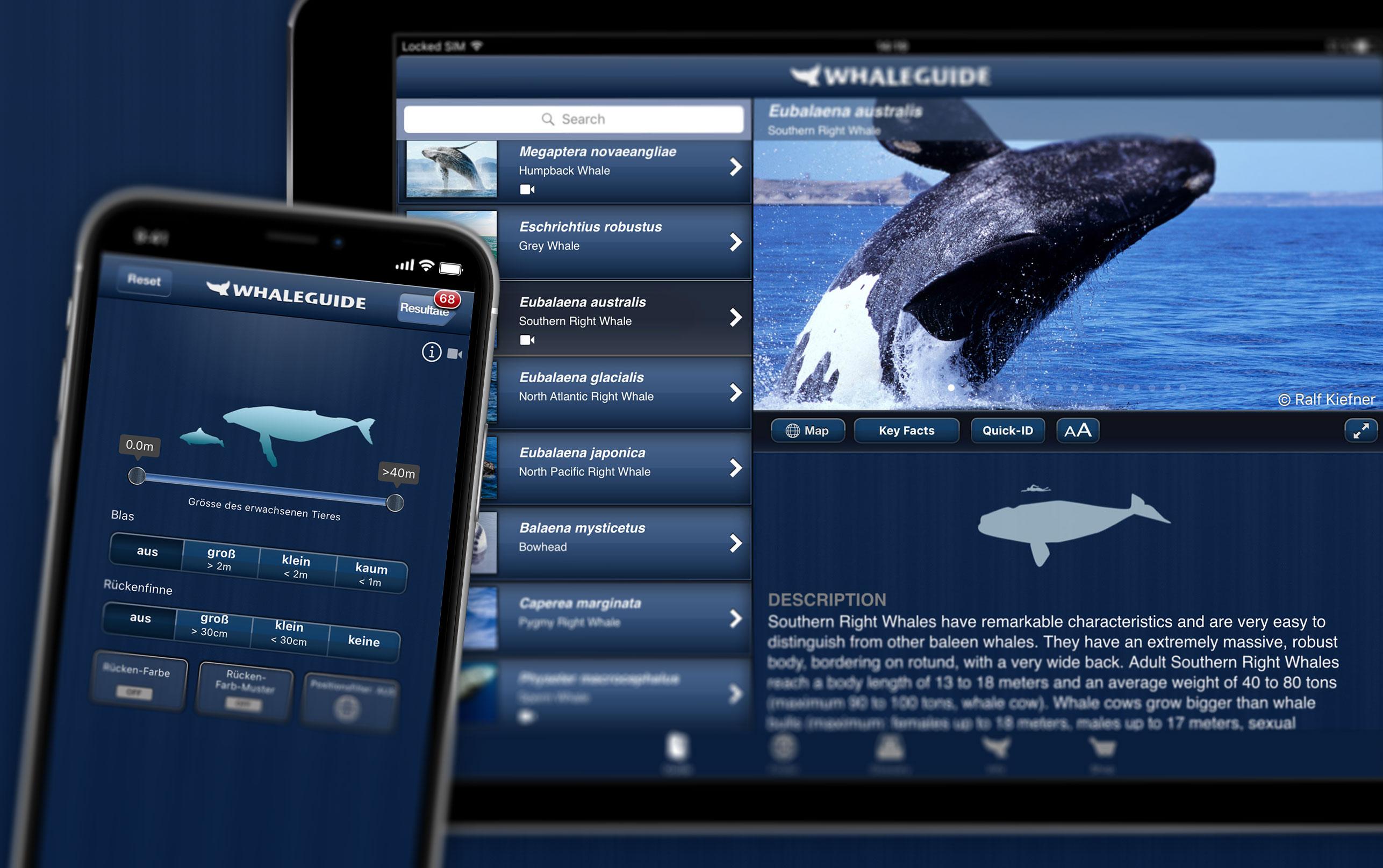 Interaktives Lexikon Wale und Delfine