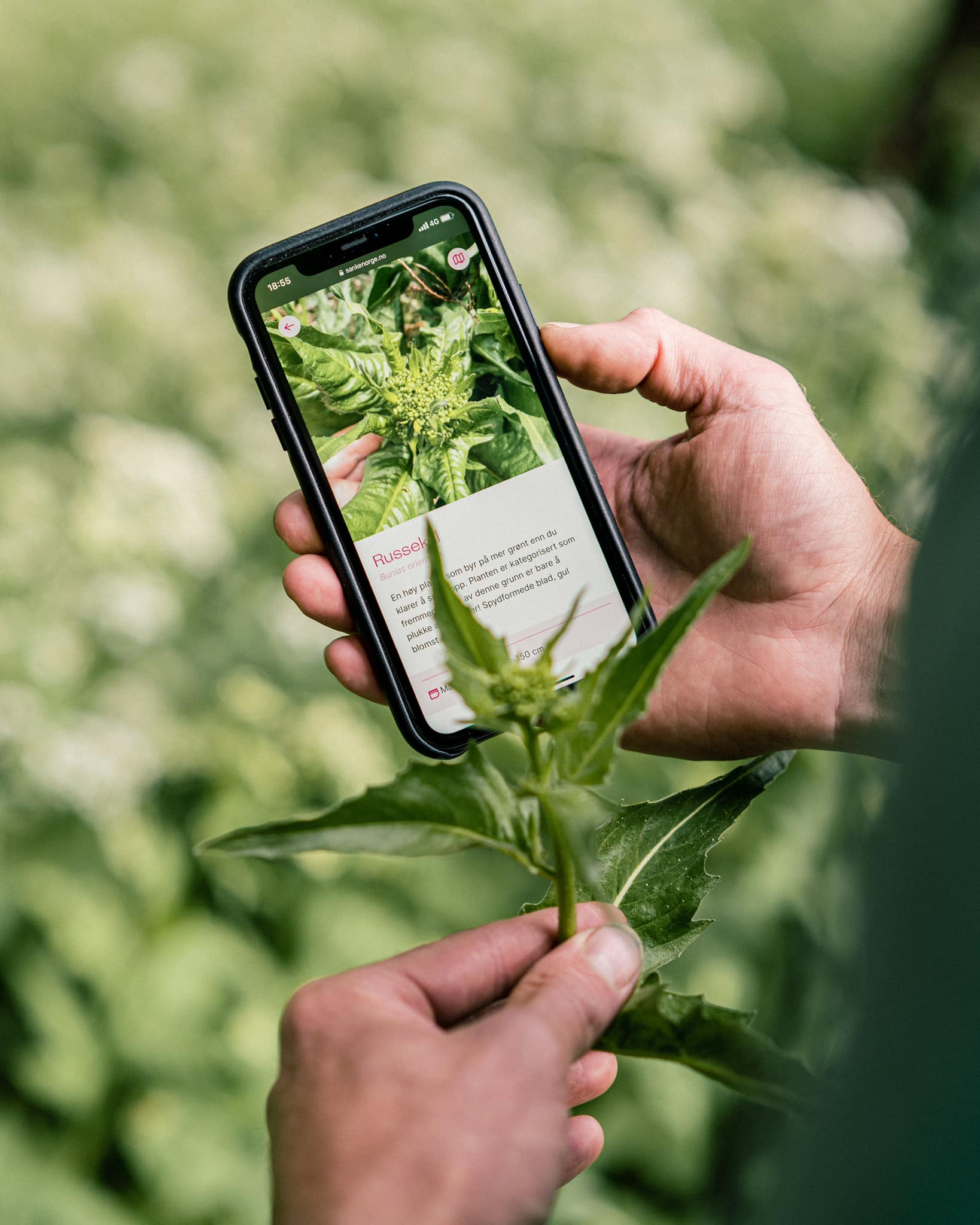 A man comparing a plant to a plant on this phone with the sanke website