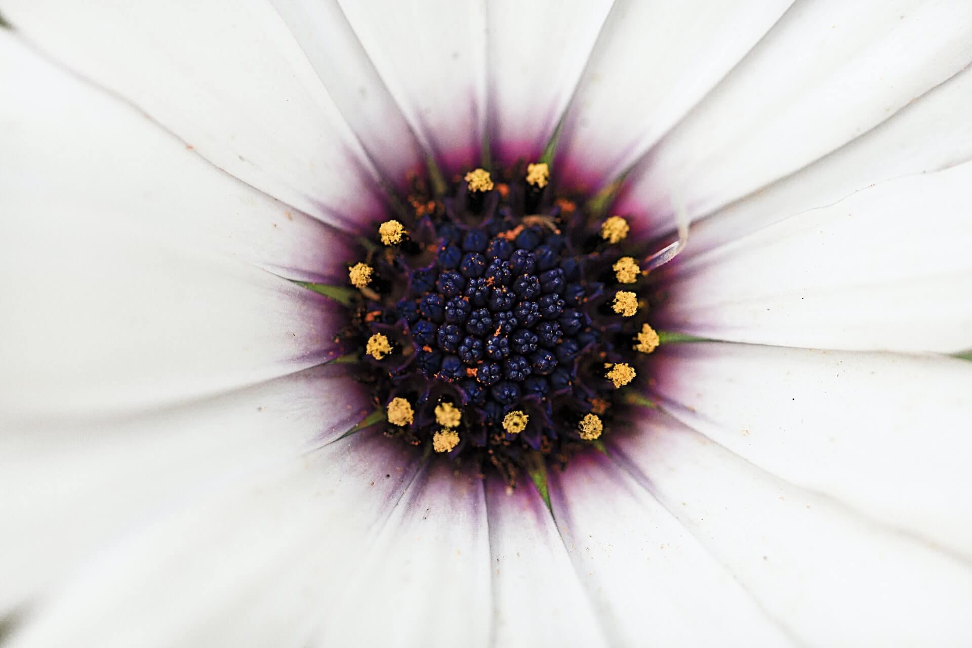 Domus Decorum Feng Shui Dizajn interijera Lana Anderson cvijet