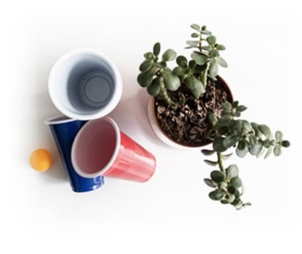 Three plastic cups and a ping pong ball next to a plant.