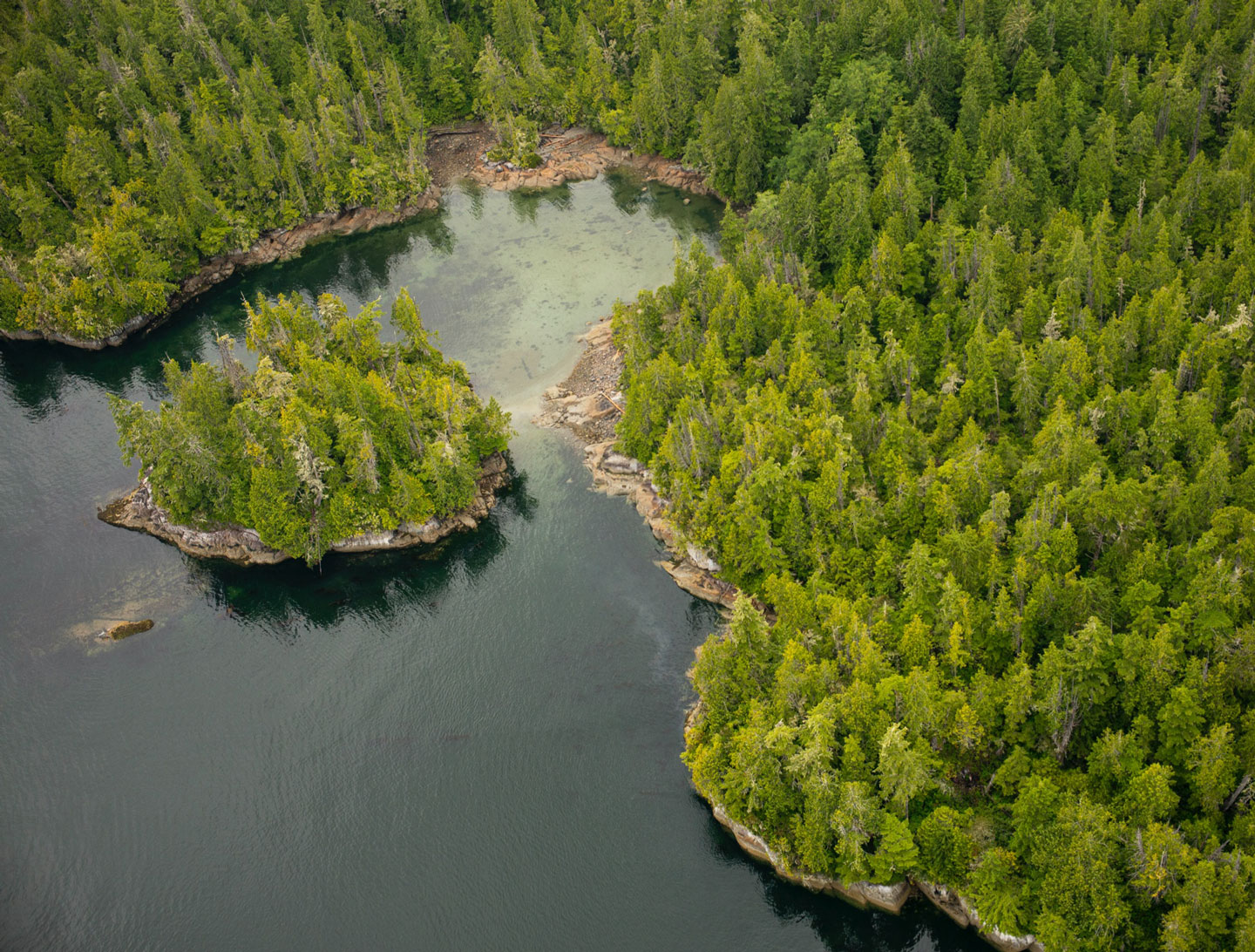 Trees and water aerial shot