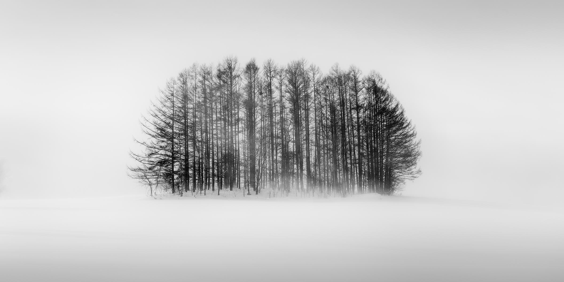 Photograph of Trees in Biei, Japan by Brent Goldman Photography