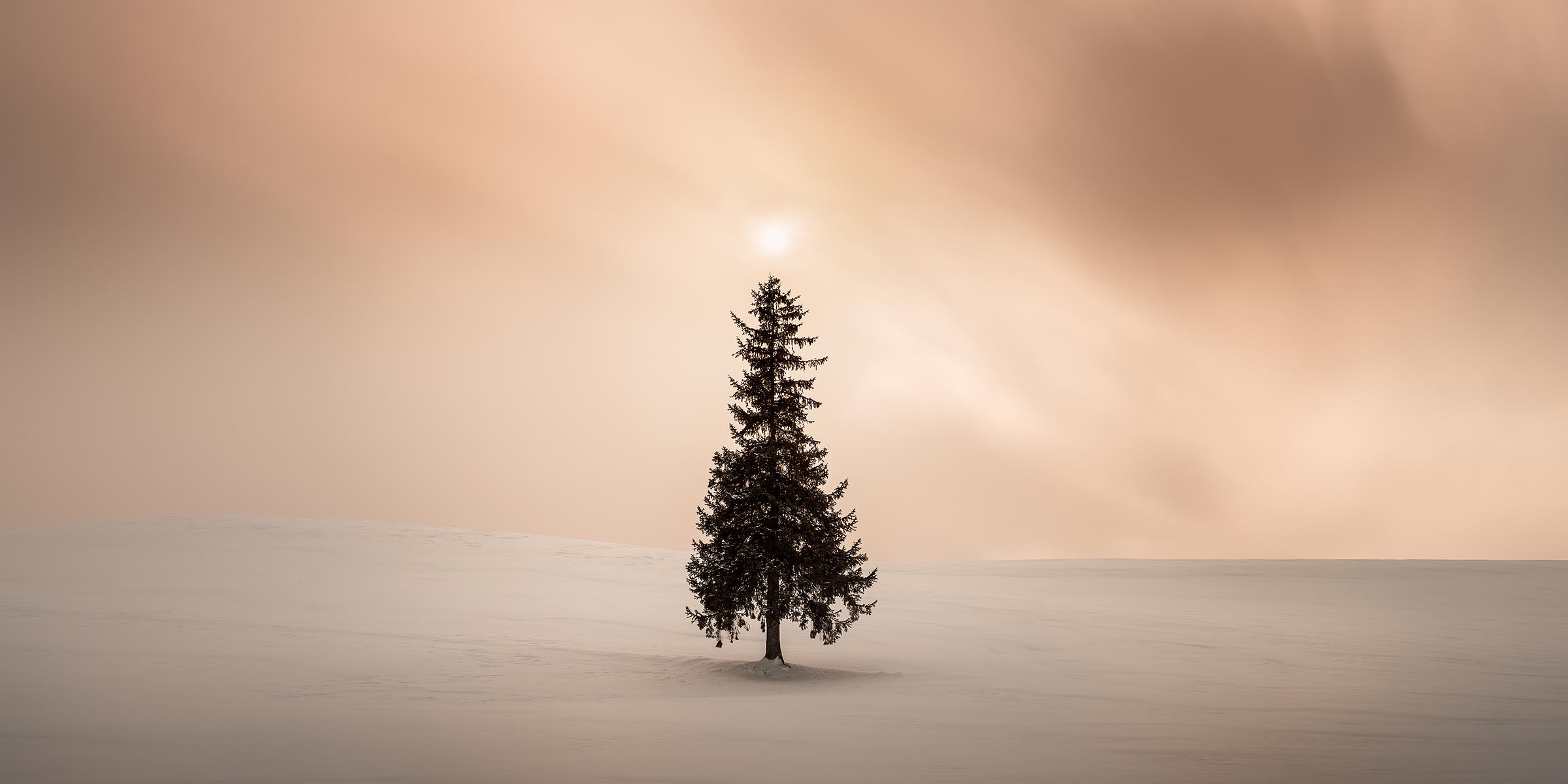Photograph of Christmas Tree in Biei, Japan by Brent Goldman Photography