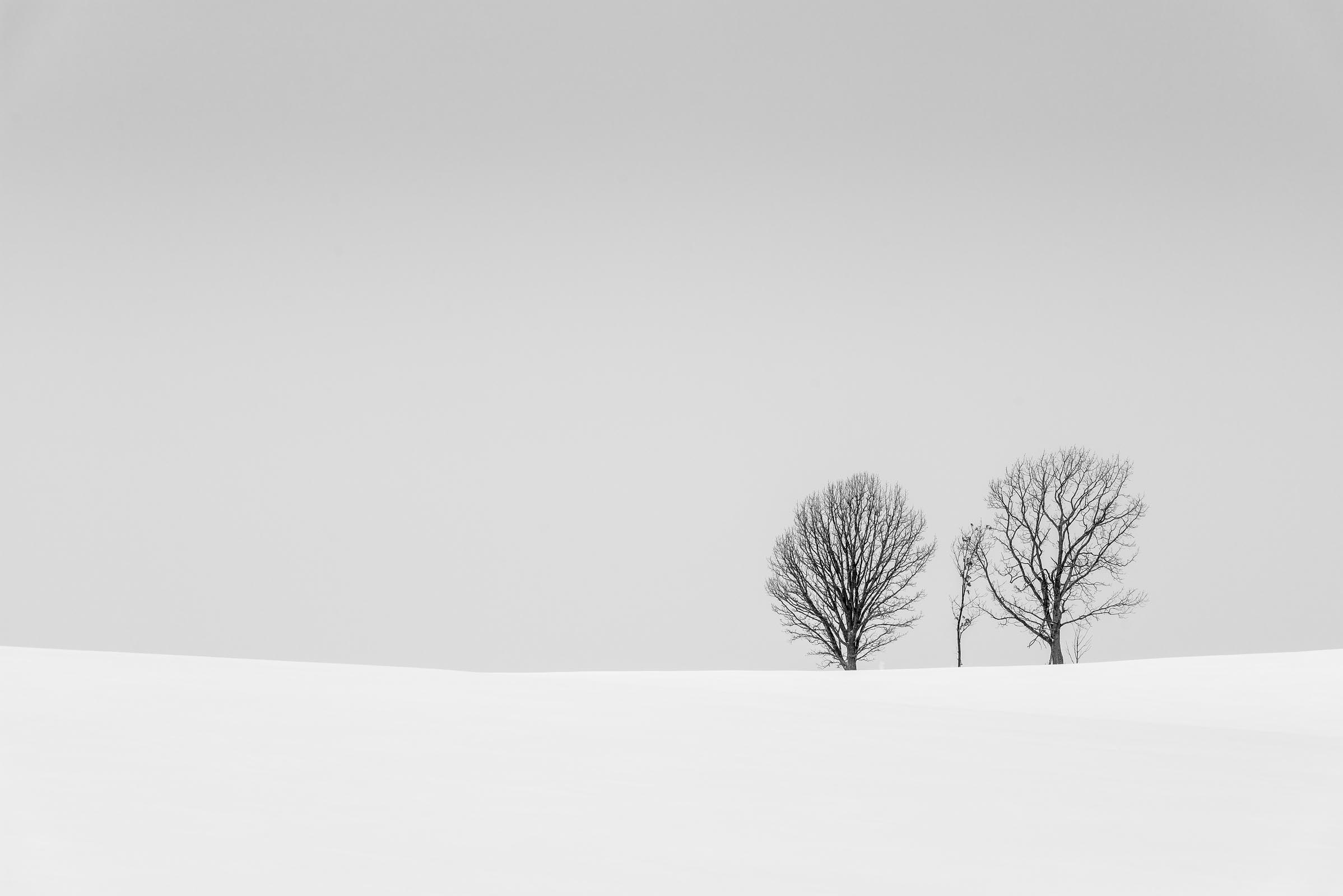 Photograph of Parent-Child-Trees in Biei , Japan by Brent Goldman Photography