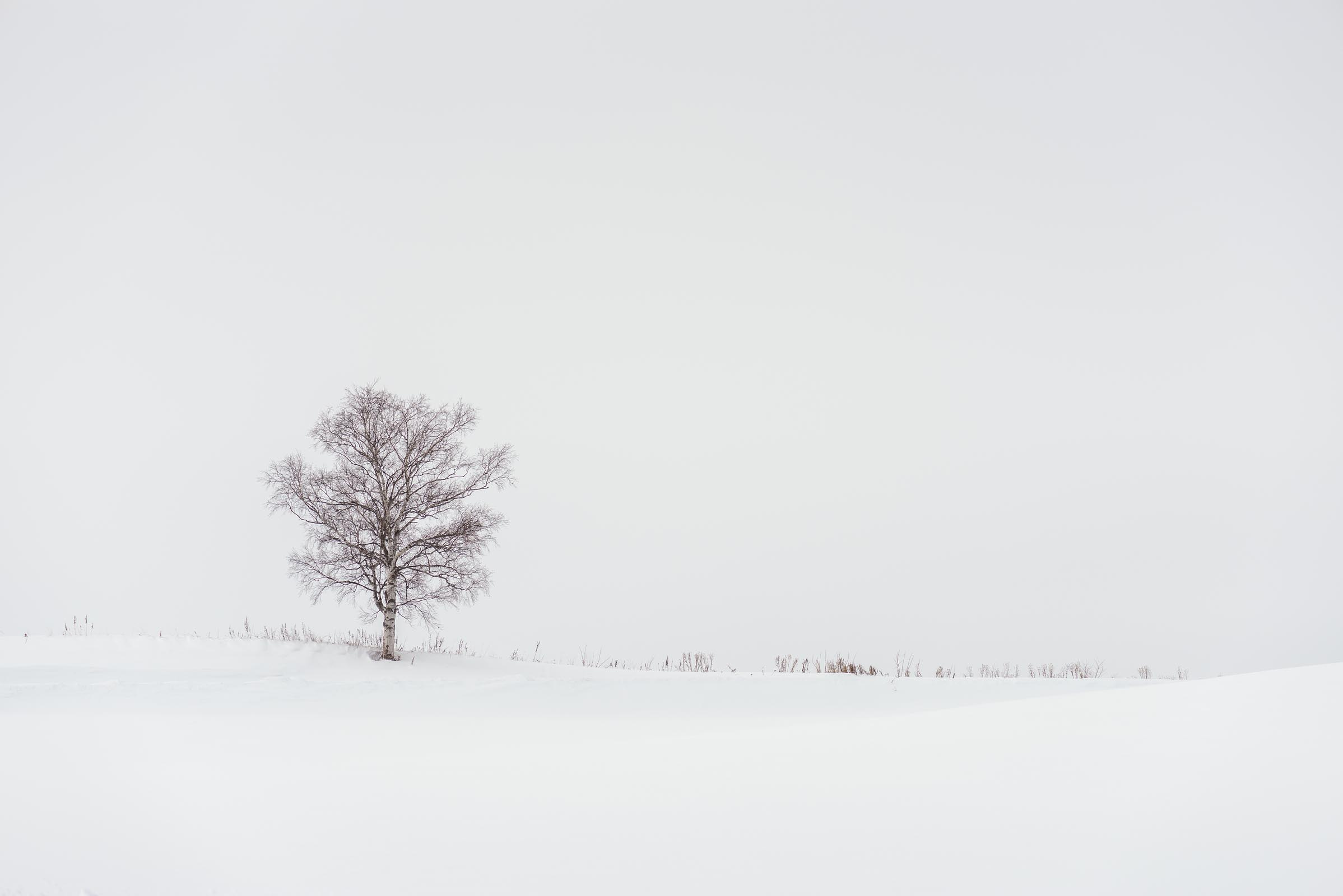 Photograph of Lone Tree in Hokkaido, Japan by Brent Goldman Photography