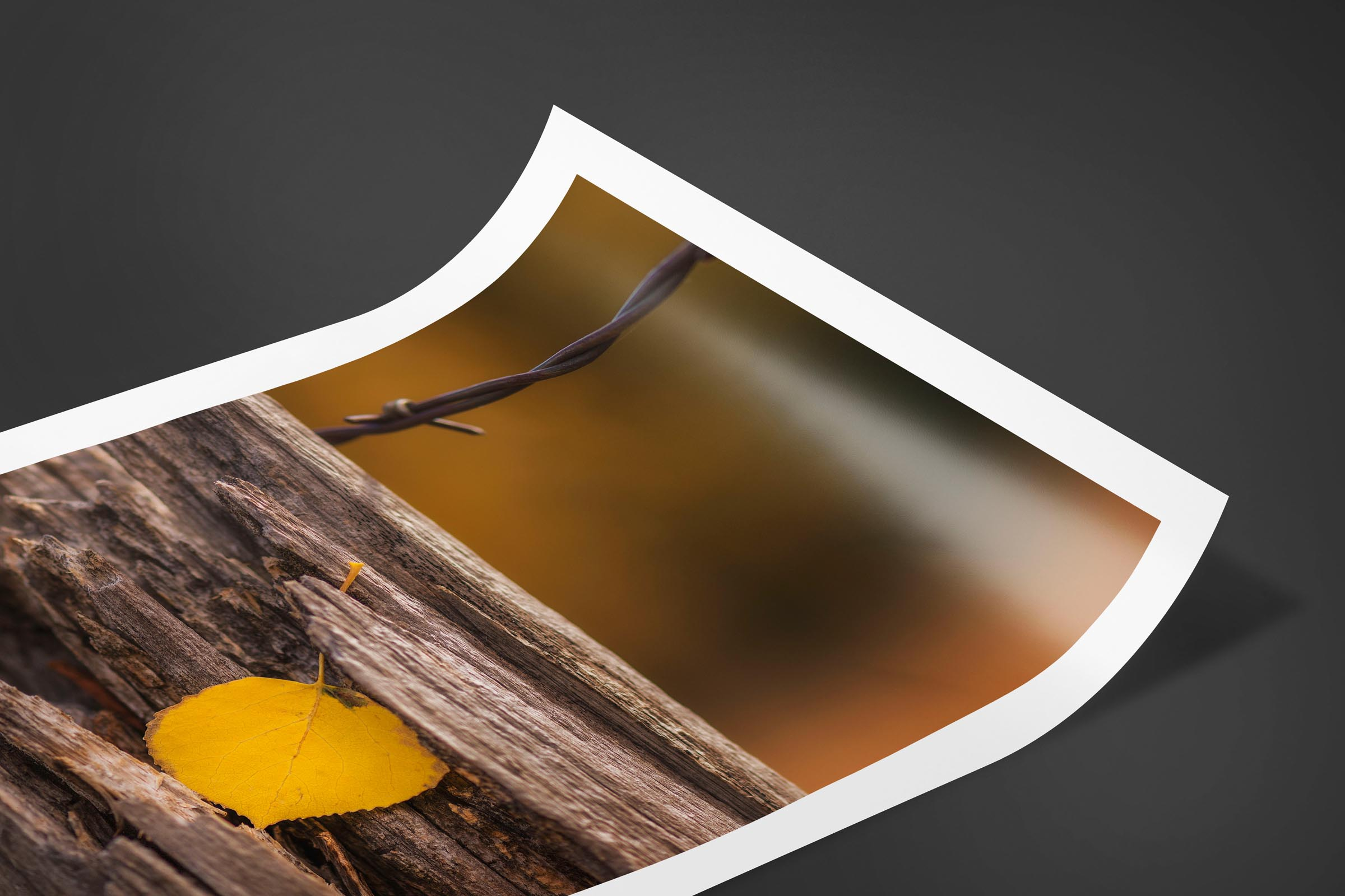 Fine art limited edition print of Resting Leaf in San Juan Mountains, Colorado by Brent Goldman Photography
