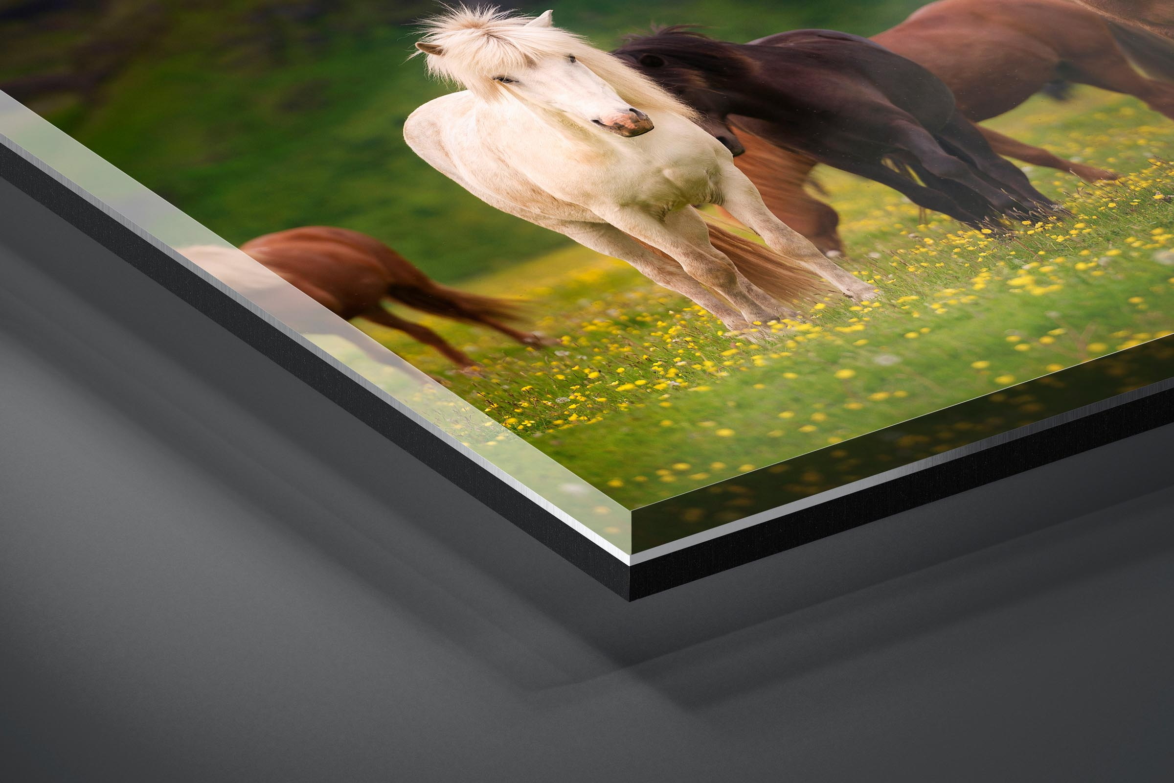Fine art limited edition acrylic print of Horses in Ring Road, Iceland by Brent Goldman Photography