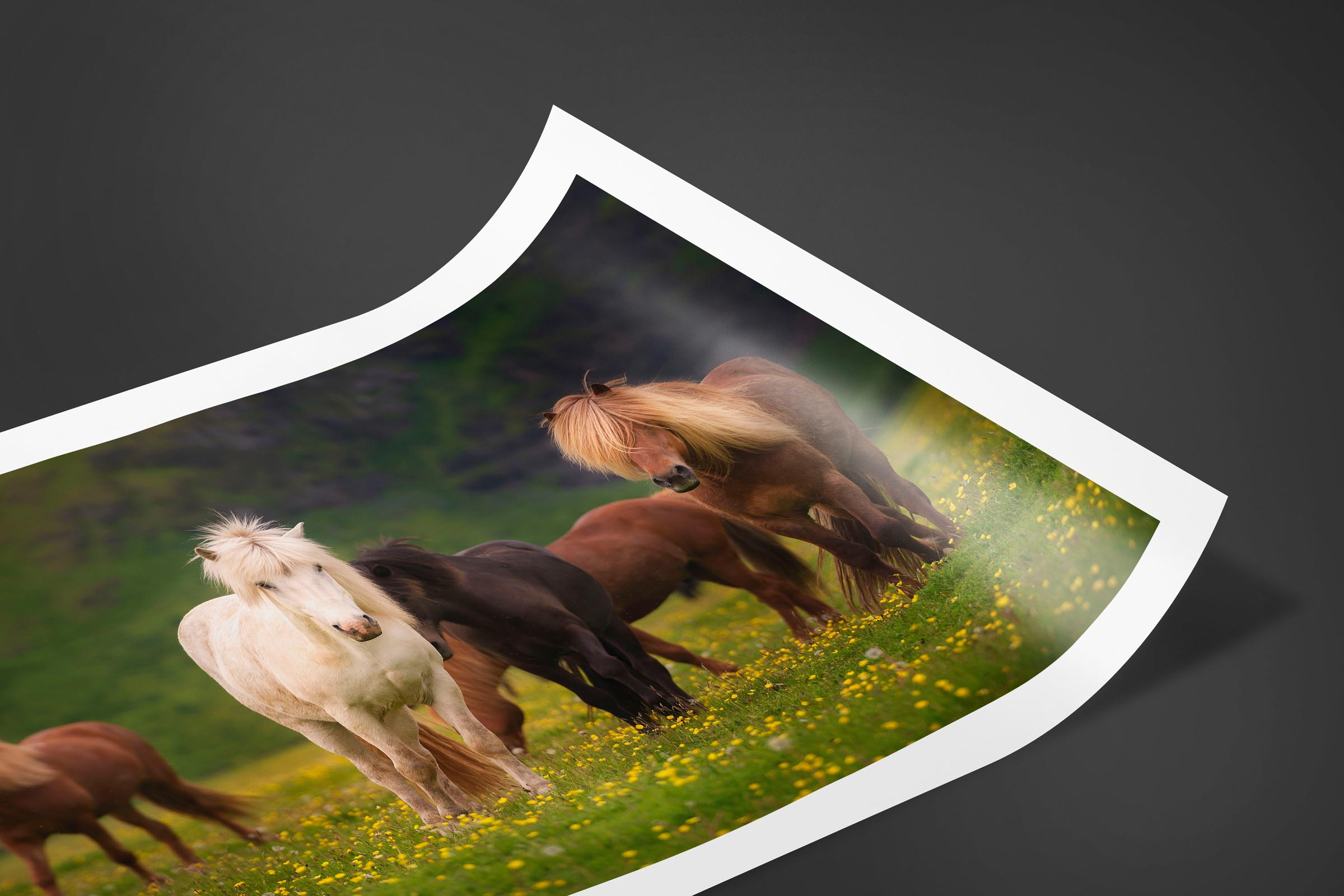 Fine art limited edition print of Horses in Ring Road, Iceland by Brent Goldman Photography