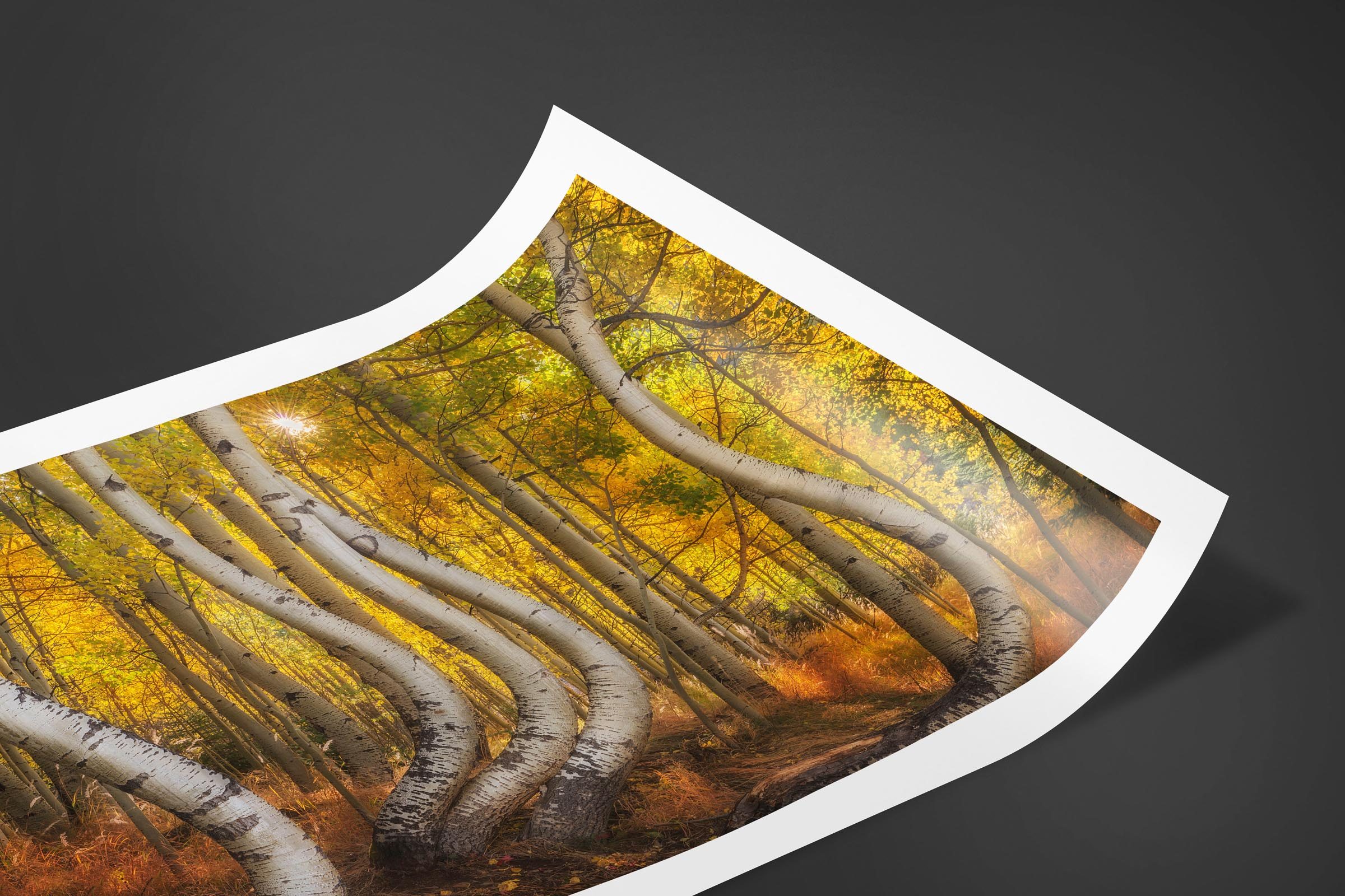 Fine art limited edition print of Bent Aspens in San Juan Mountains, Colorado by Brent Goldman Photography