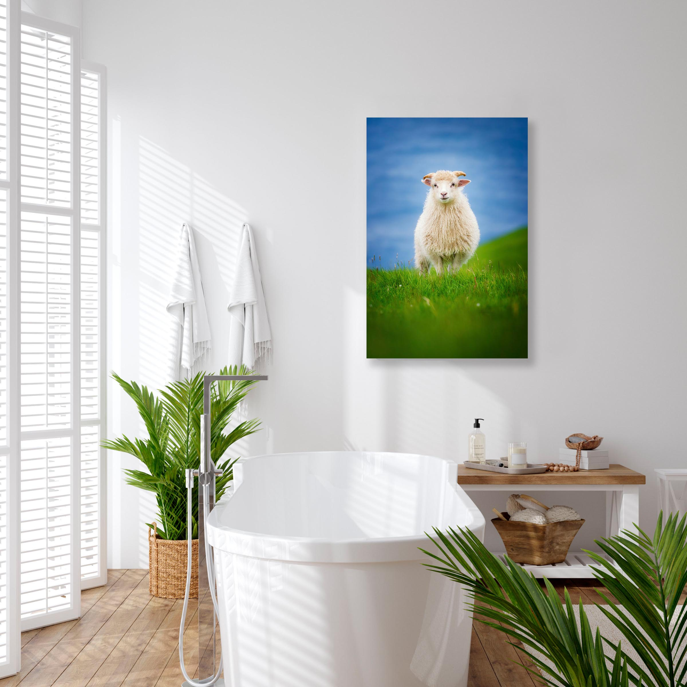 Wall art of Sheep in Kalsoy, Faroe Islands by Brent Goldman Photography