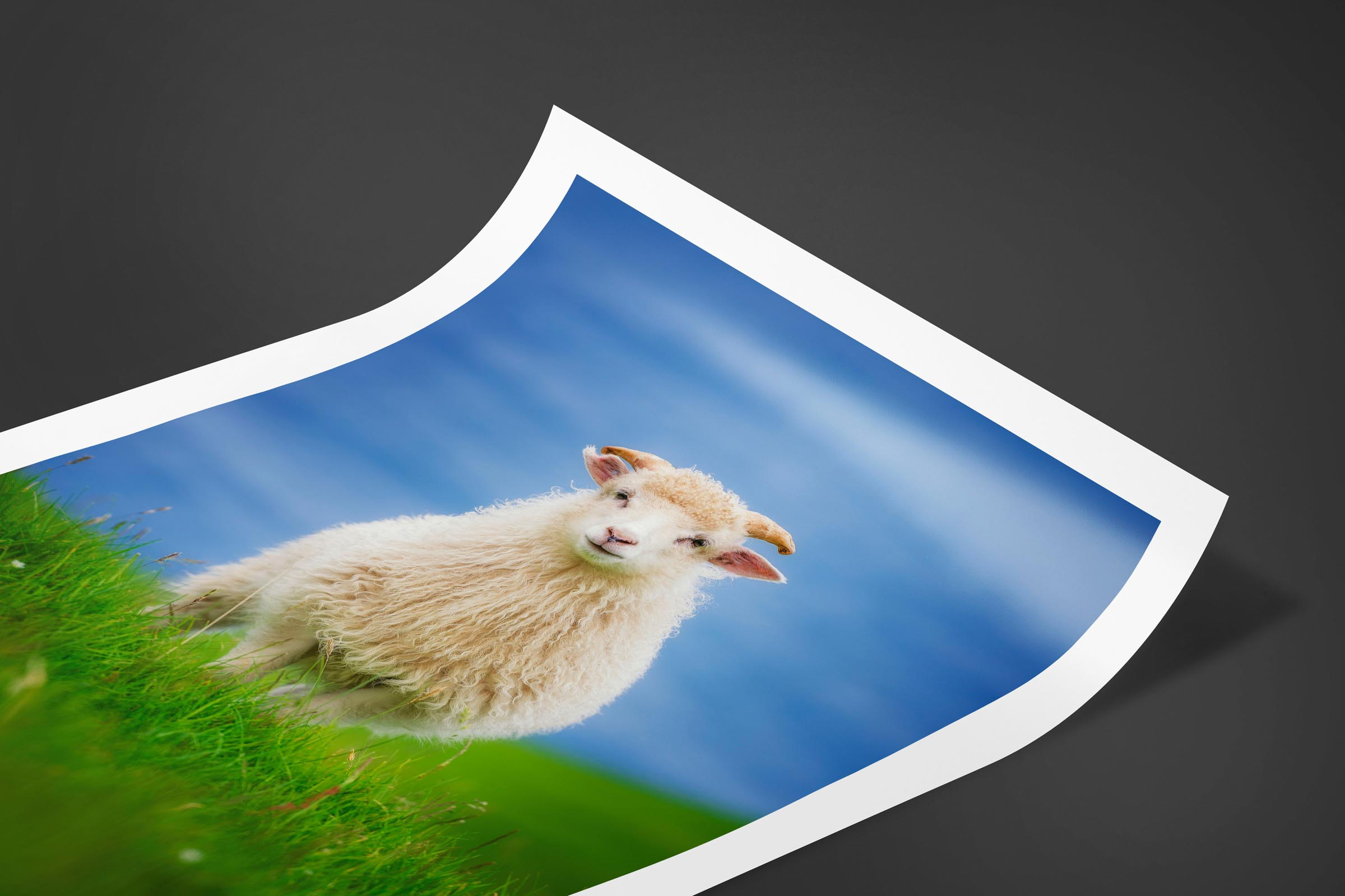 Fine art limited edition print of Sheep in Kalsoy, Faroe Islands by Brent Goldman Photography