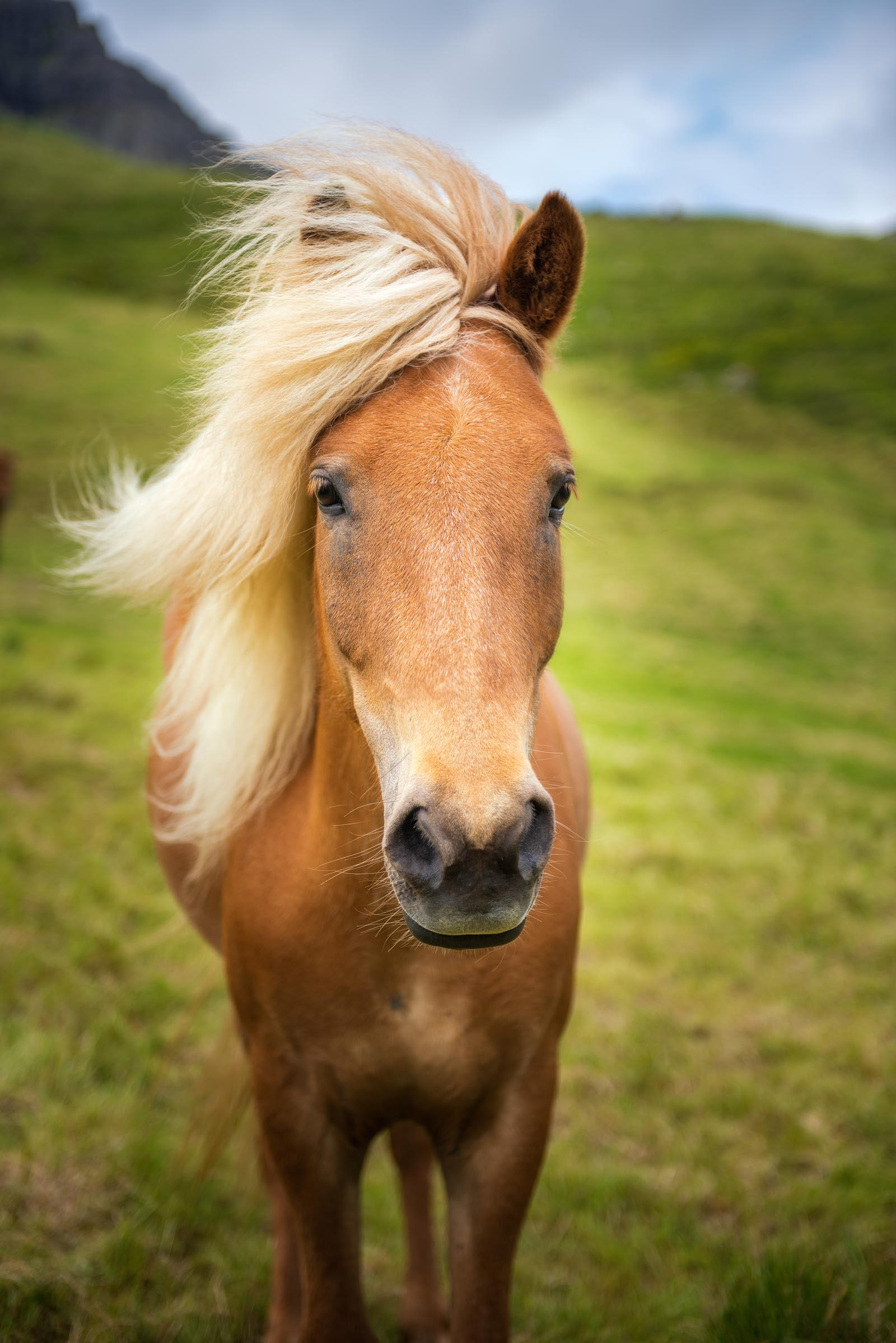 Photograph of Horse in Gasadalur, Faroe Islands by Brent Goldman Photography