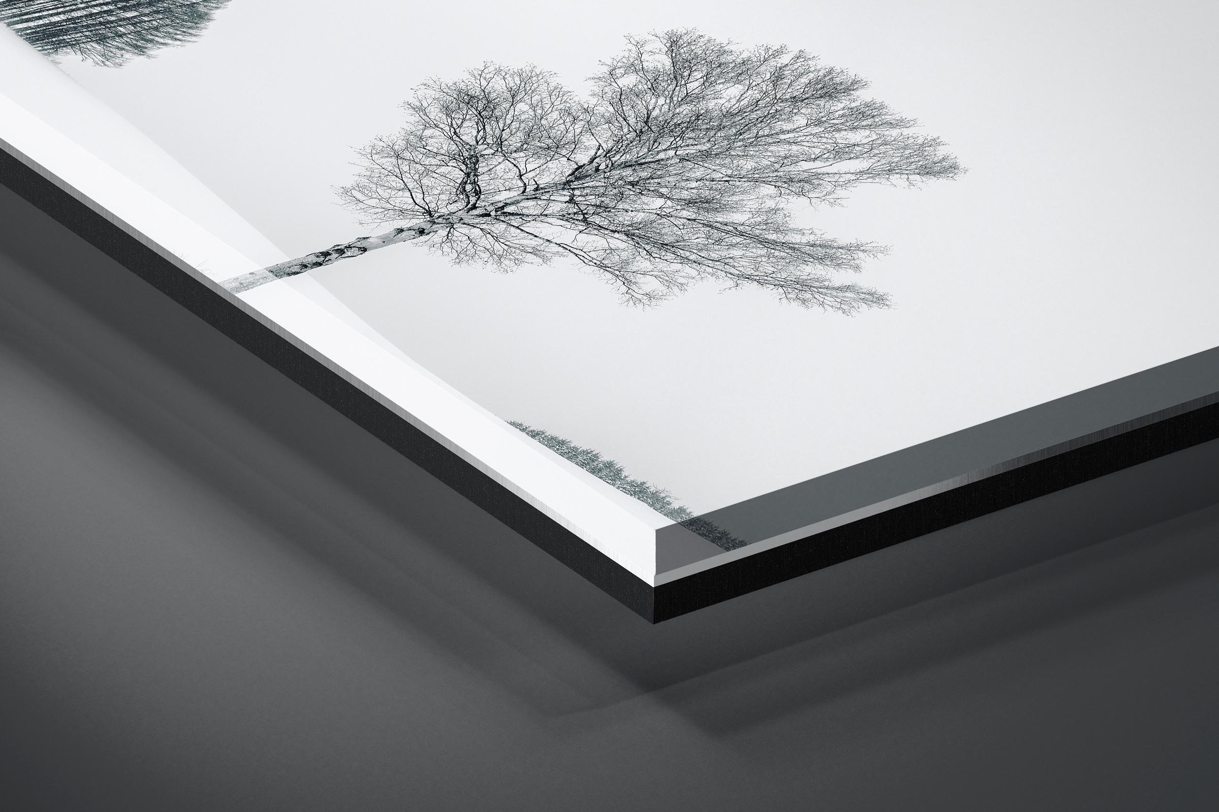 Fine art limited edition acrylic print of Tree in Biei, Japan by Brent Goldman Photography