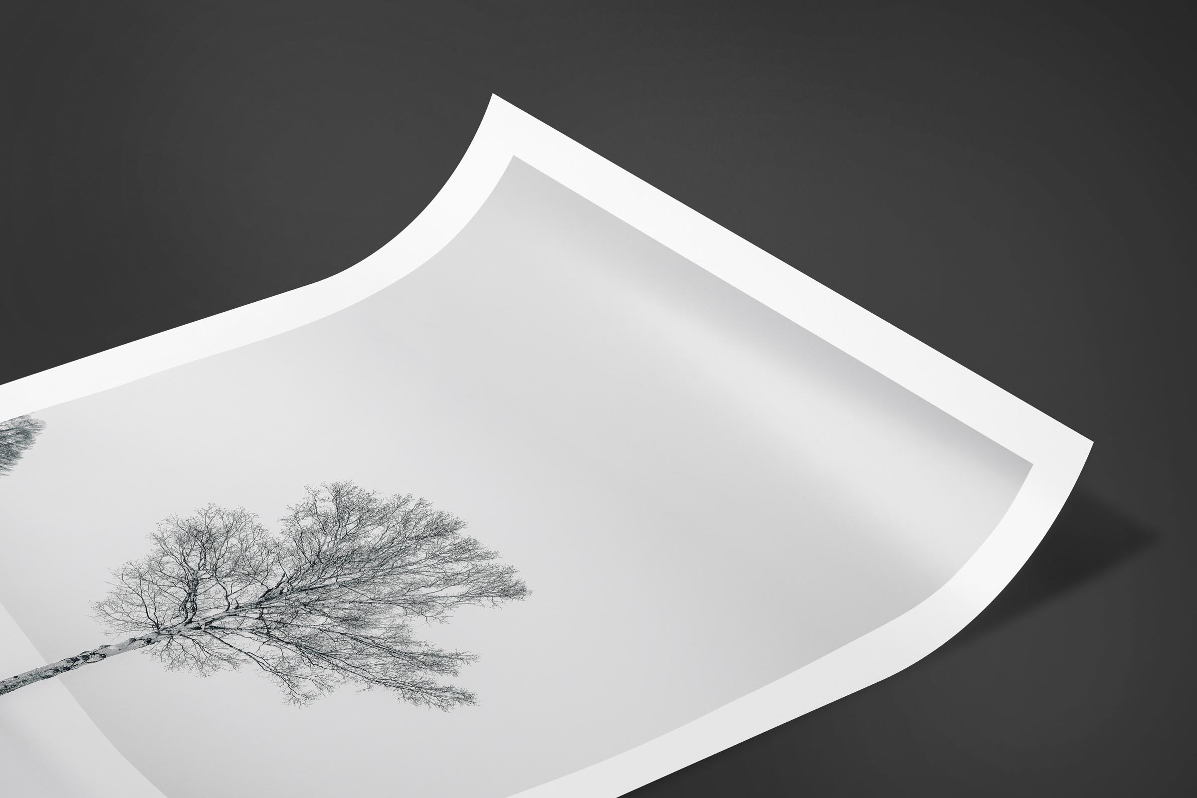 Fine art limited edition print of Tree in Biei, Japan by Brent Goldman Photography