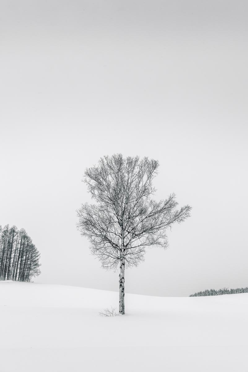 Photograph of Tree in Biei, Japan by Brent Goldman Photography