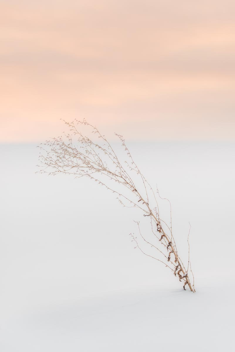 Photograph of Plant in Biei, Japan by Brent Goldman Photography