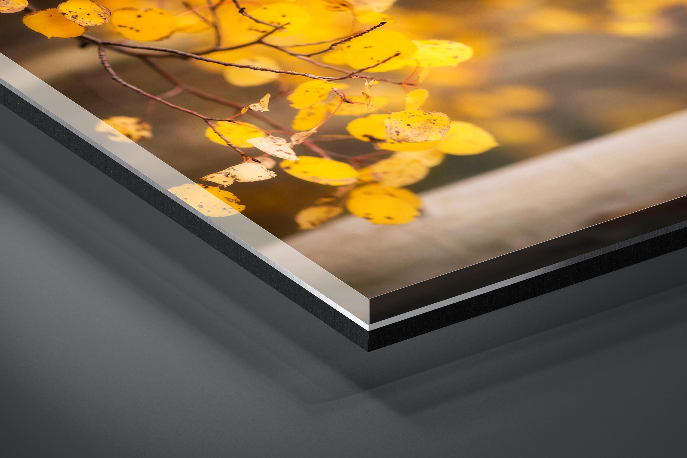 Fine art limited edition acrylic print of Aspen Leaves in Aspen, Colorado by Brent Goldman Photography