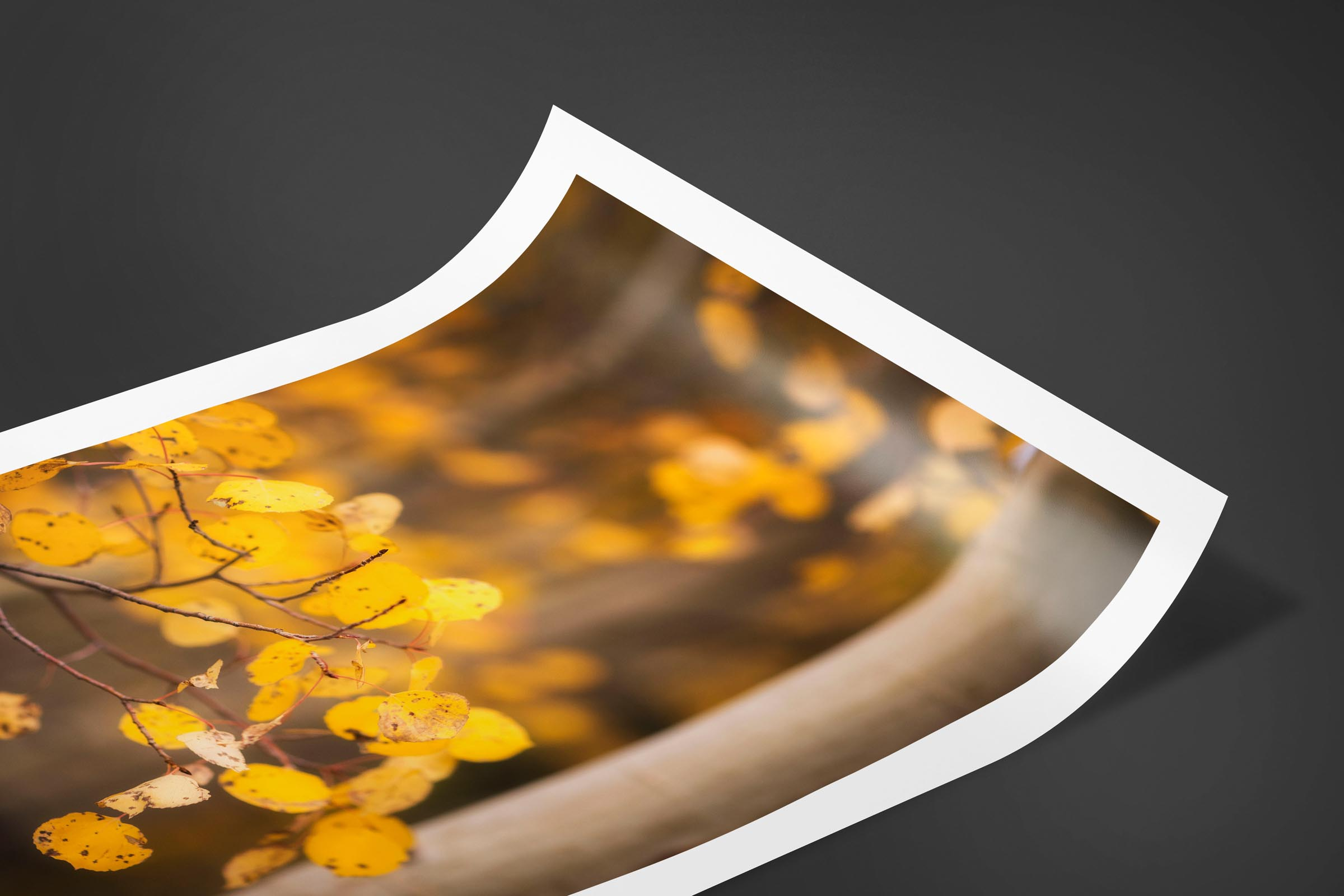 Fine art limited edition print of Aspen Leaves in Aspen, Colorado by Brent Goldman Photography
