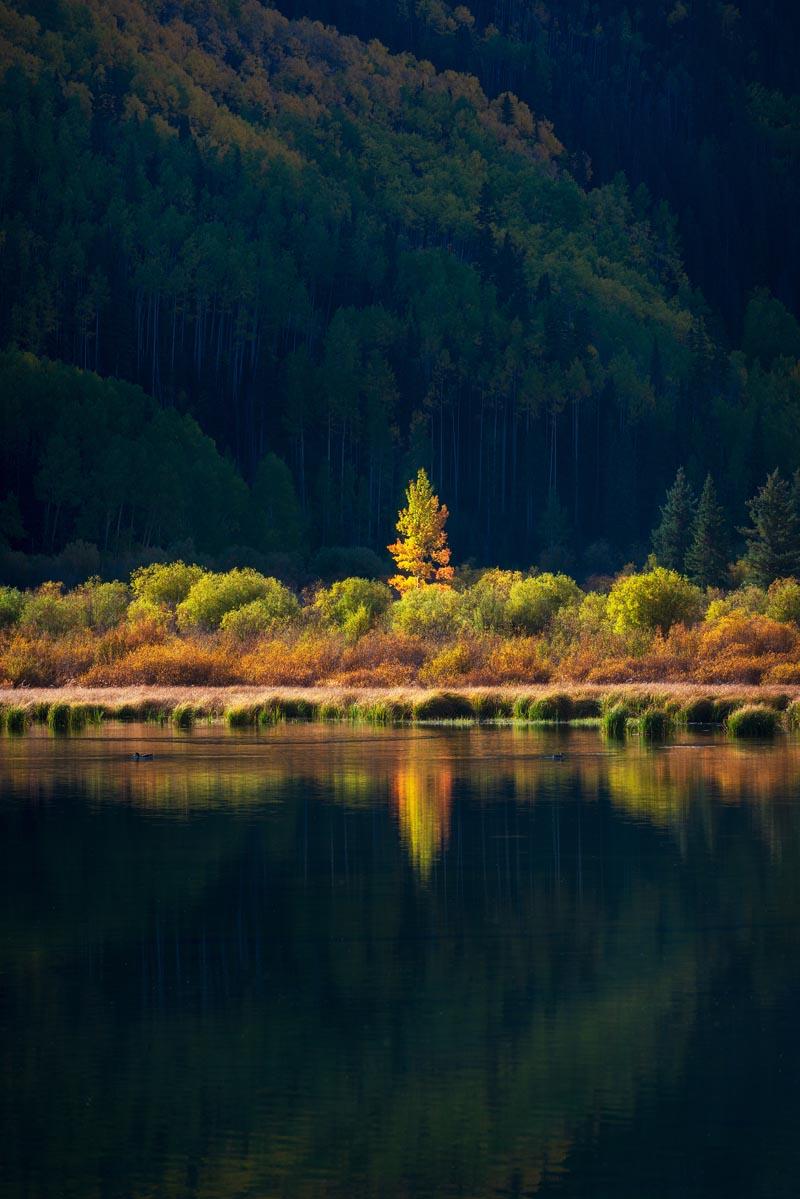 Photograph of Aspen Reflection in San Juan Mountains, Colorado by Brent Goldman Photography