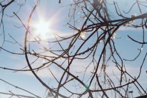 Shine Bright Branches