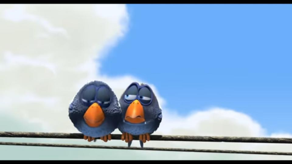 A small blue bird lands on a telephone wire and makes itself comfortable, only to have a second small bird land next to it. The two birds quickly start to squabble as others land on the wire and join in. But, is there going to be enough space for a much bigger bird?
