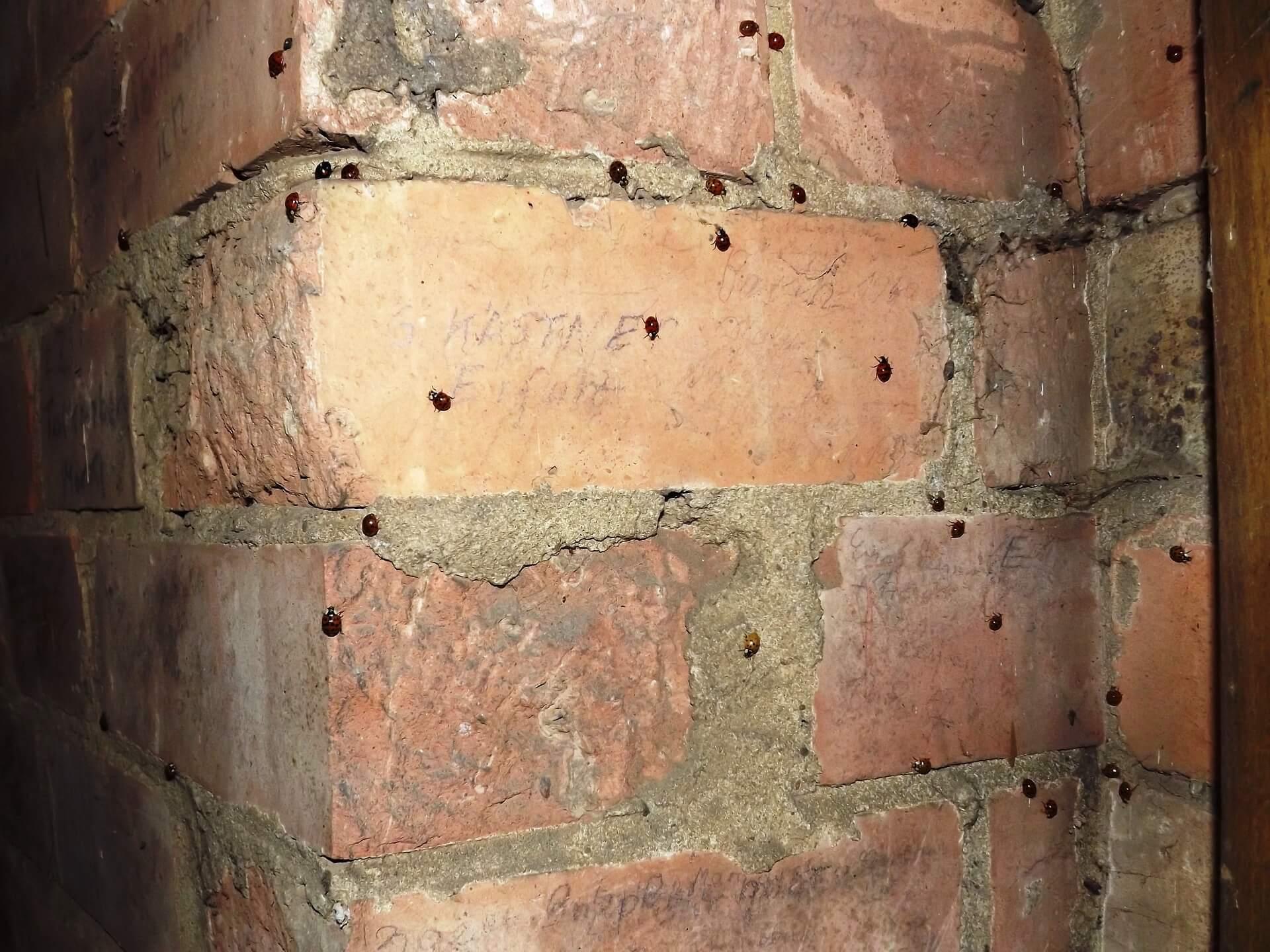 Muro di mattoni ricoperto di piccoli scarafaggi