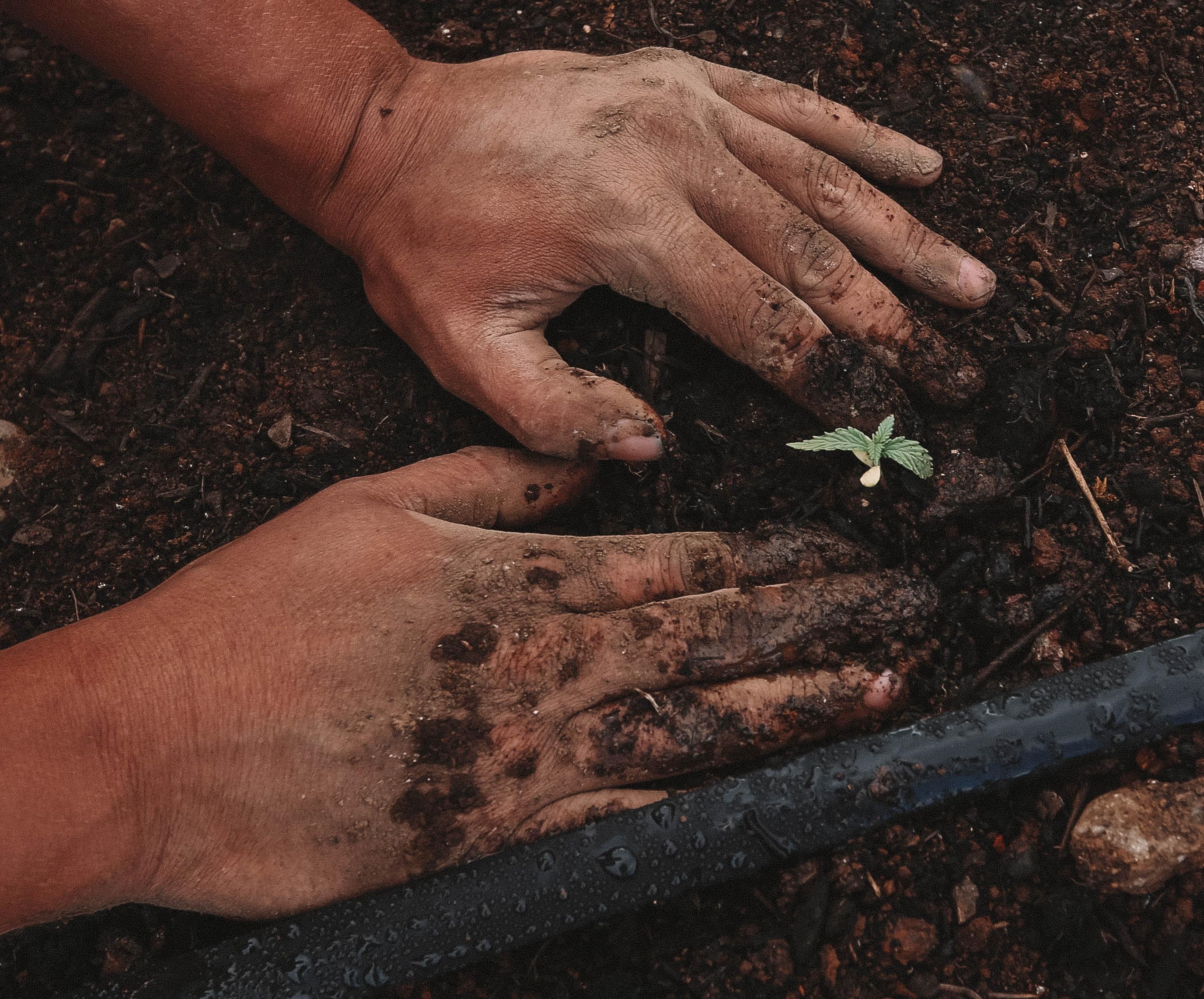 growing produce demands