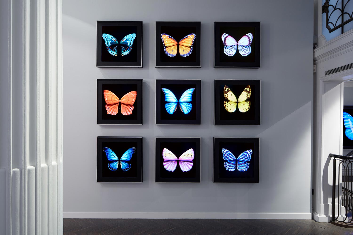 Metamorphosis Solo by Dominic Harris at Halcyon Gallery