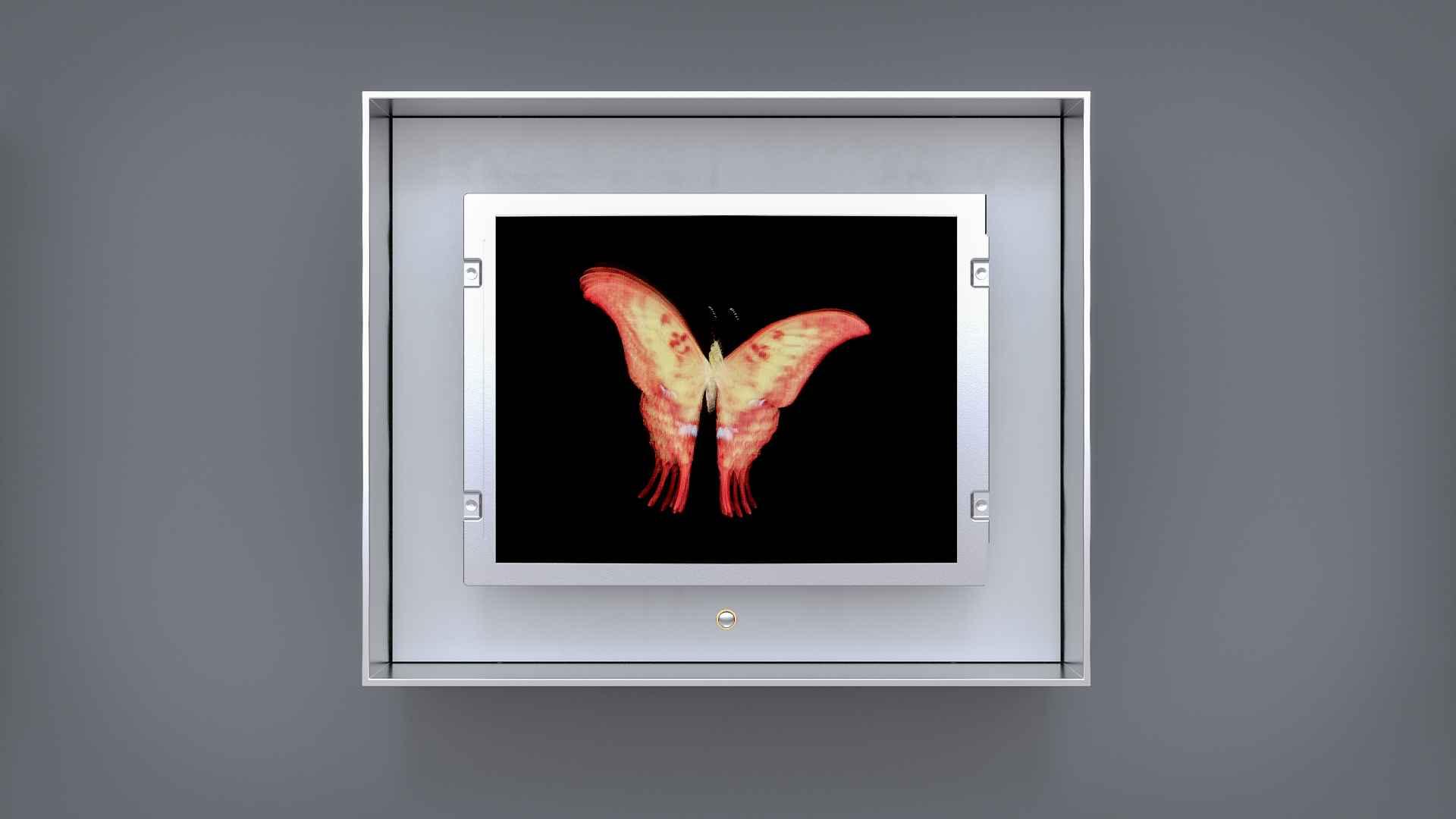 Baby Flutter: Medium Swallowtail
