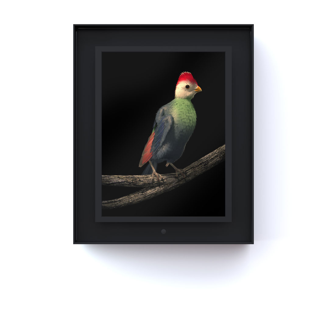 Ruffled: Red Crested Turaco